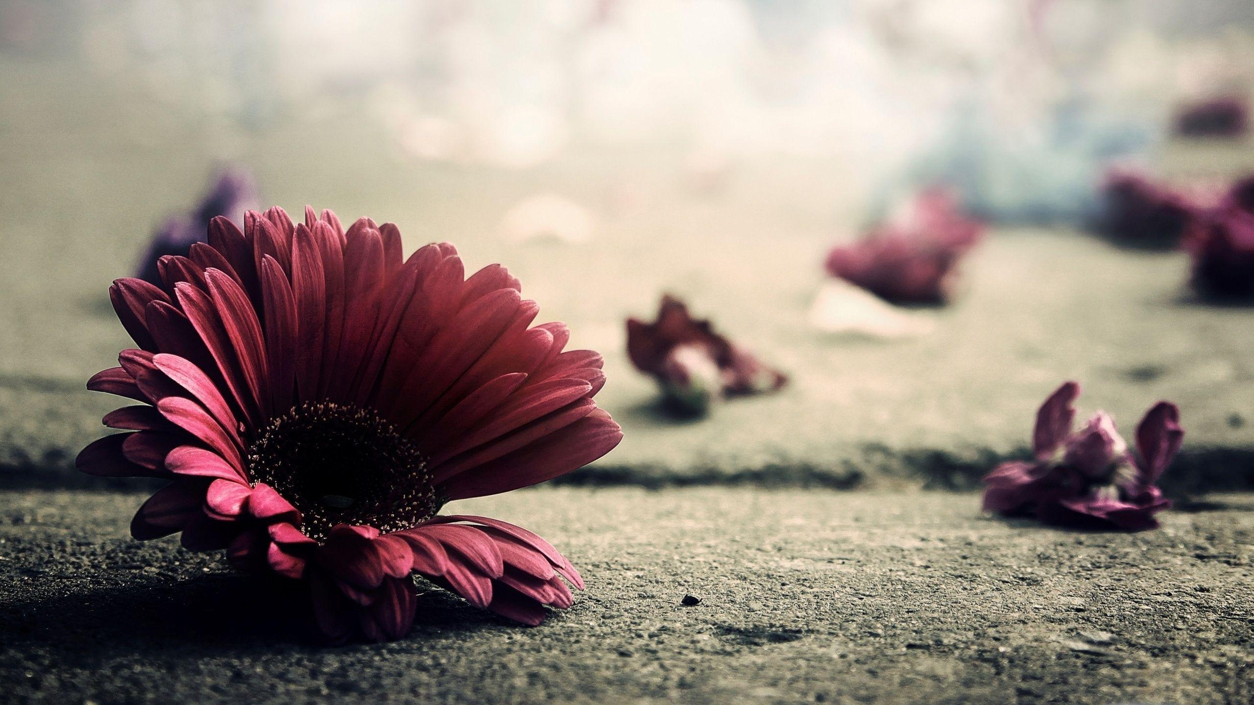 Vintage Wallpapers HD Flower Pictures