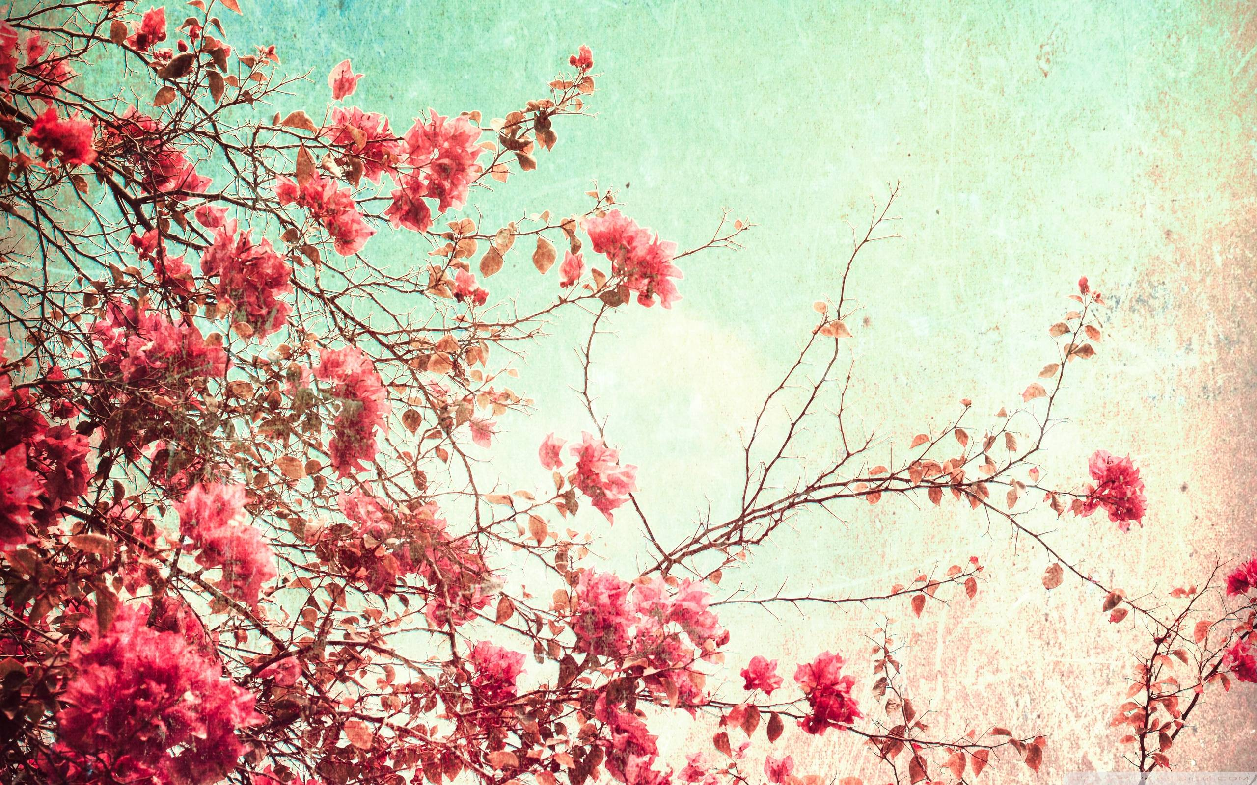 Vintage Wallpapers 5 amazing backgrounds 31376 HD Wallpapers