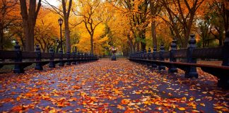 Autumn Central Park New York Wallpapers.jpg