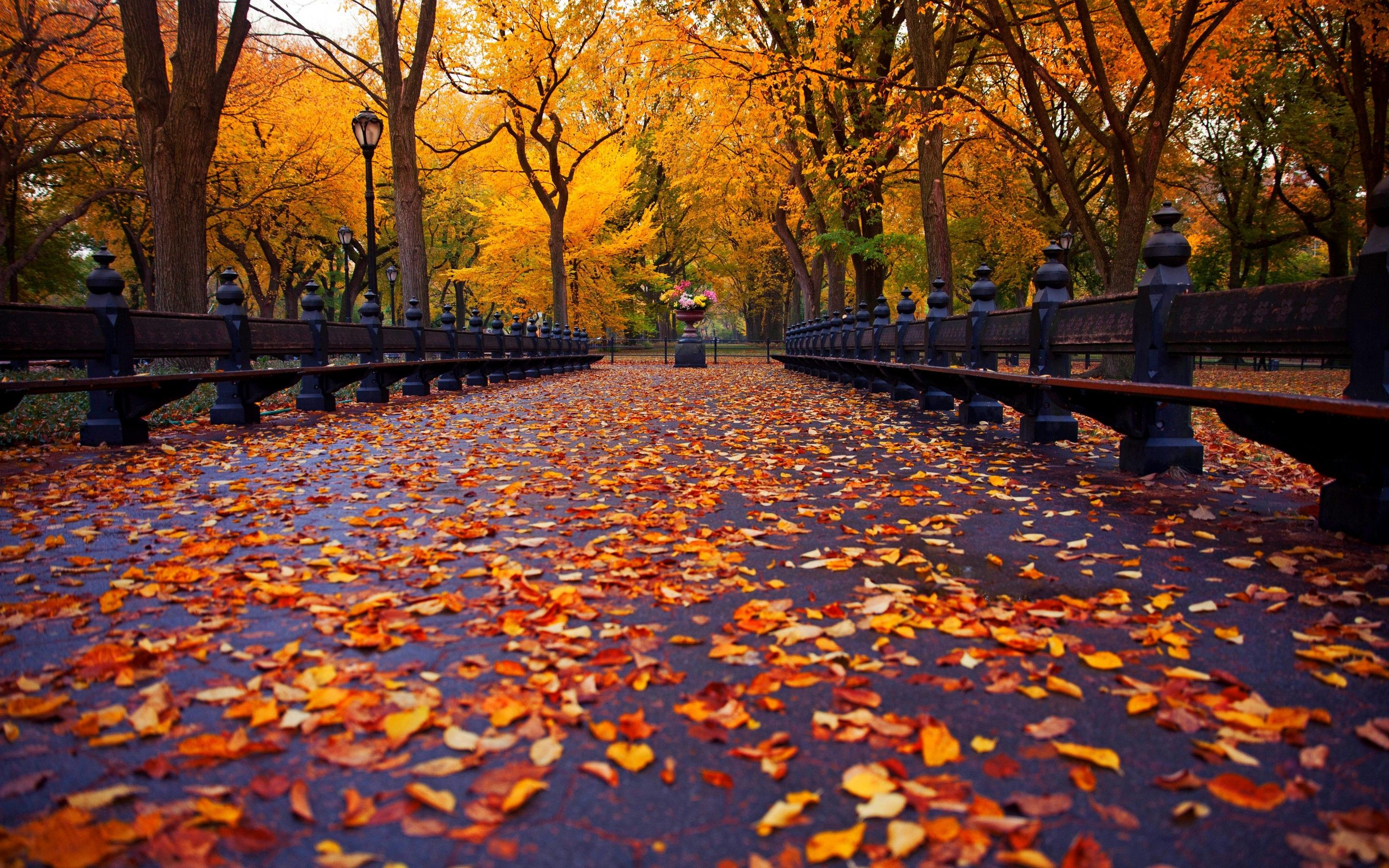 Central Park Fall Wallpapers