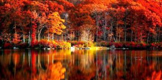 Fall Colors Reflection Wallpapers.jpg
