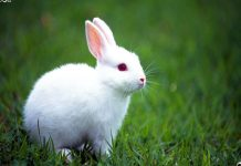 Rabbit Wallpapers.jpg