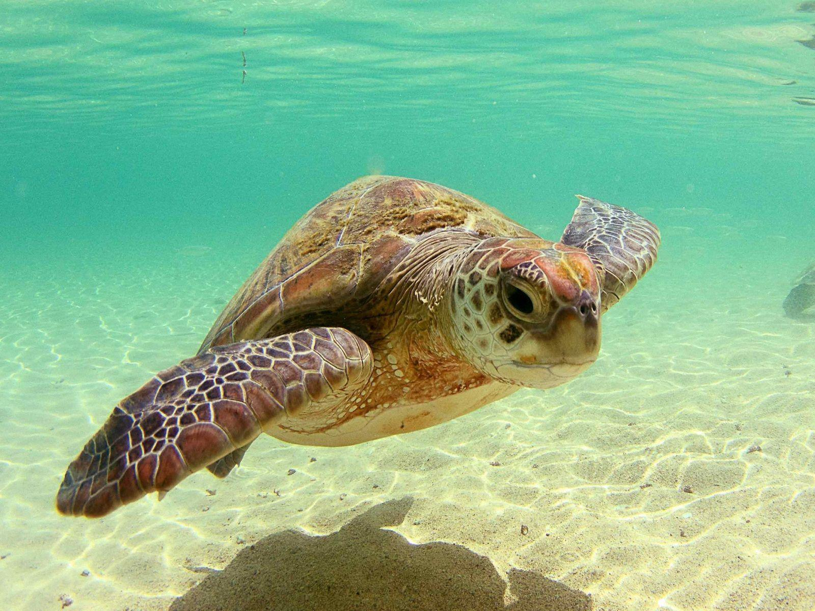 Download Sea Turtle Wallpapers 11274 1600x1200 px High Resolution