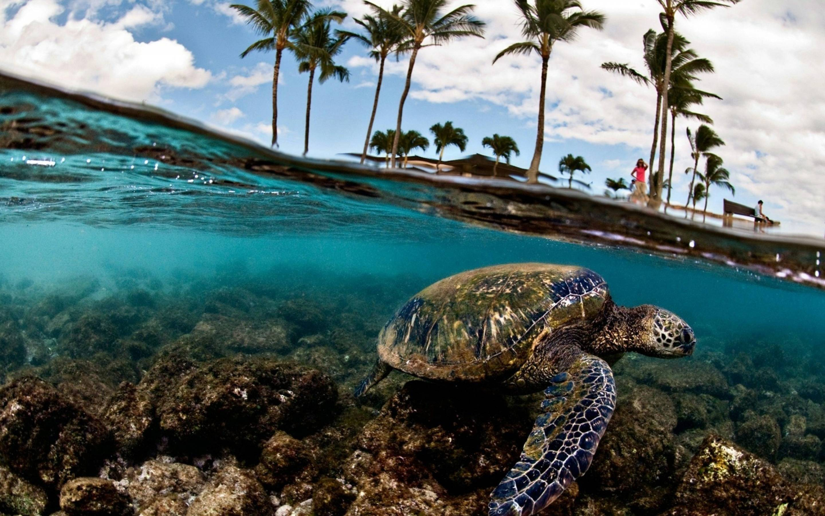Sea Turtle Wallpapers