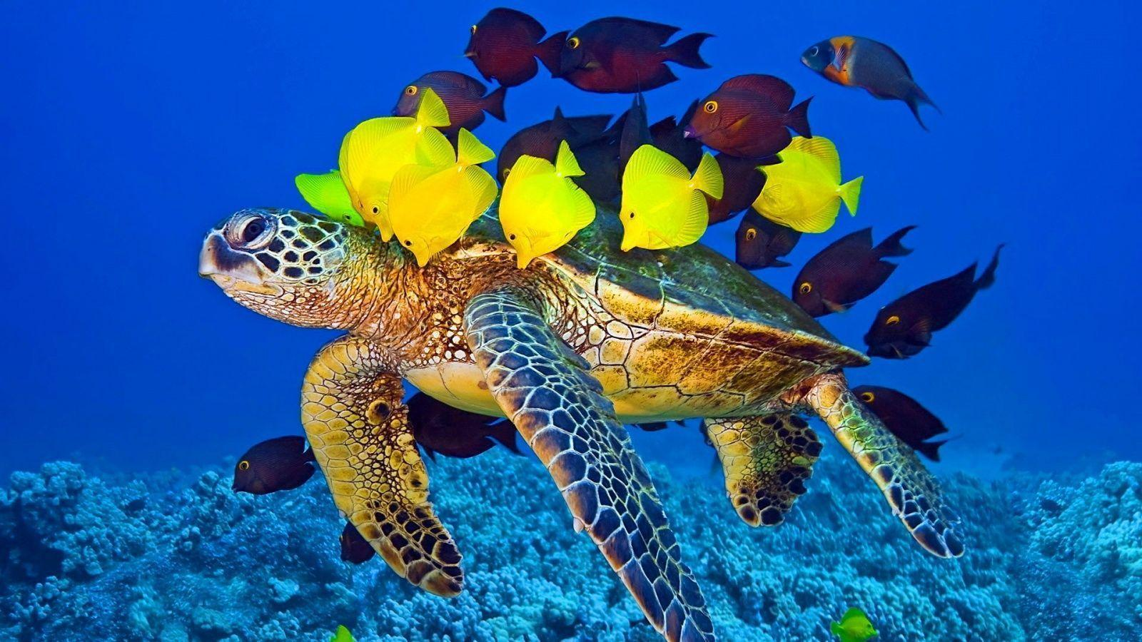 Wallpapers For > Baby Sea Turtle Wallpapers