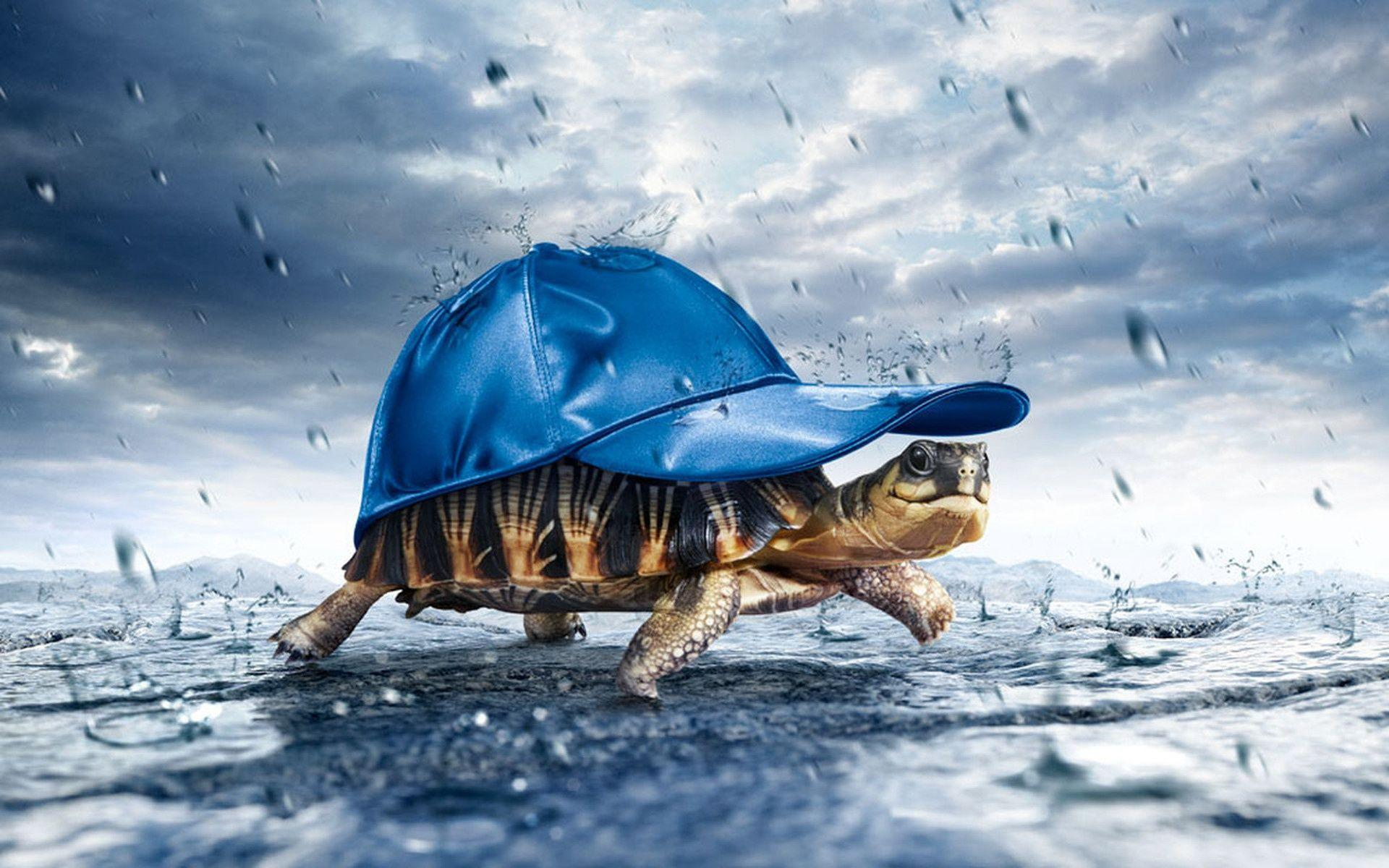 Animals For > Land Turtle Wallpapers