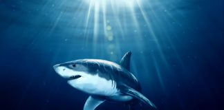 1543091067_215_hd Shark Wallpapers Wallpaper Cave.jpg