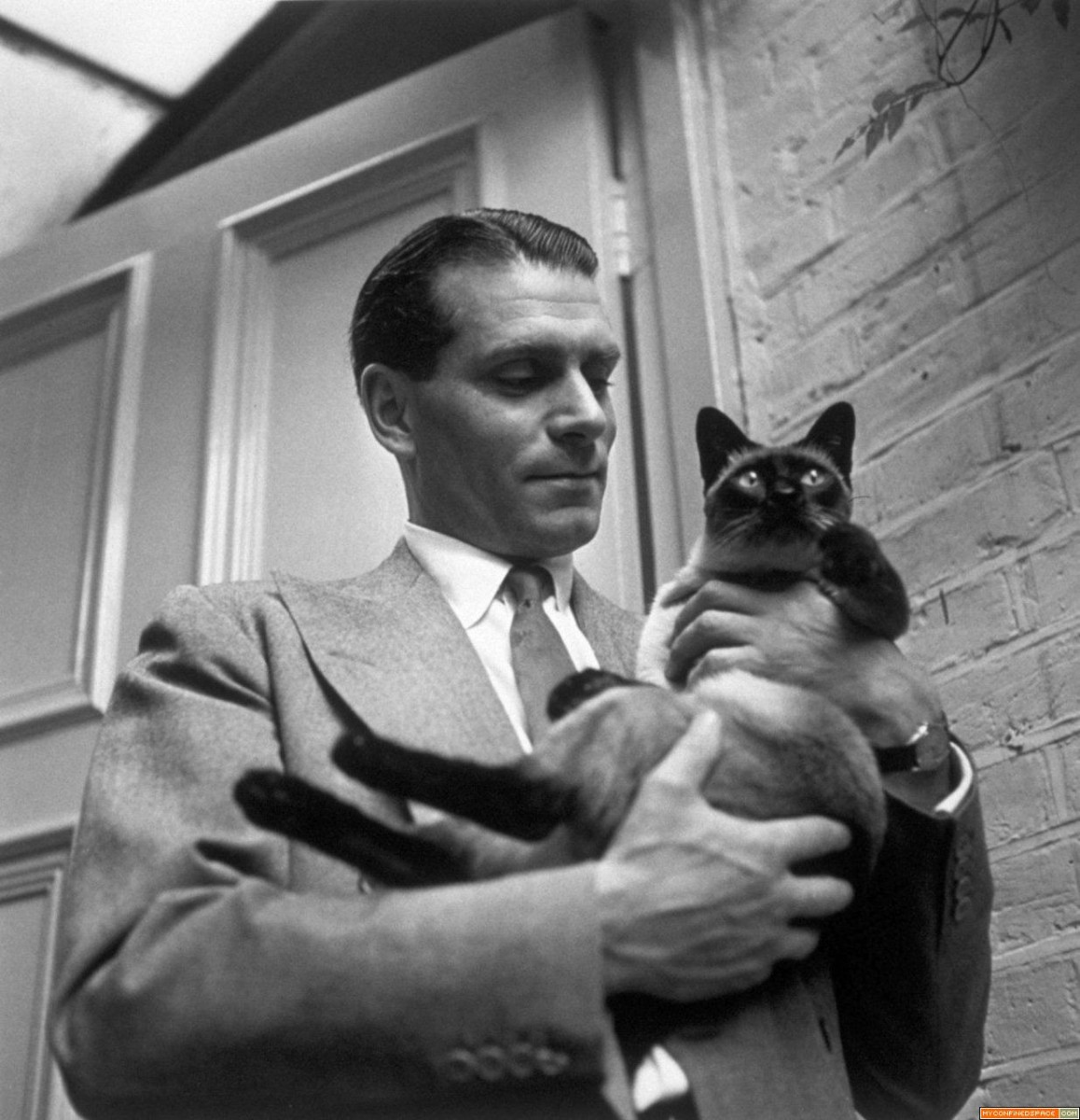 Laurence Olivier photo 2 of 5 pics, wallpapers