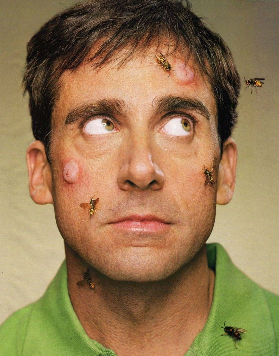 Steve Carell photo 1 of 43 pics, wallpapers
