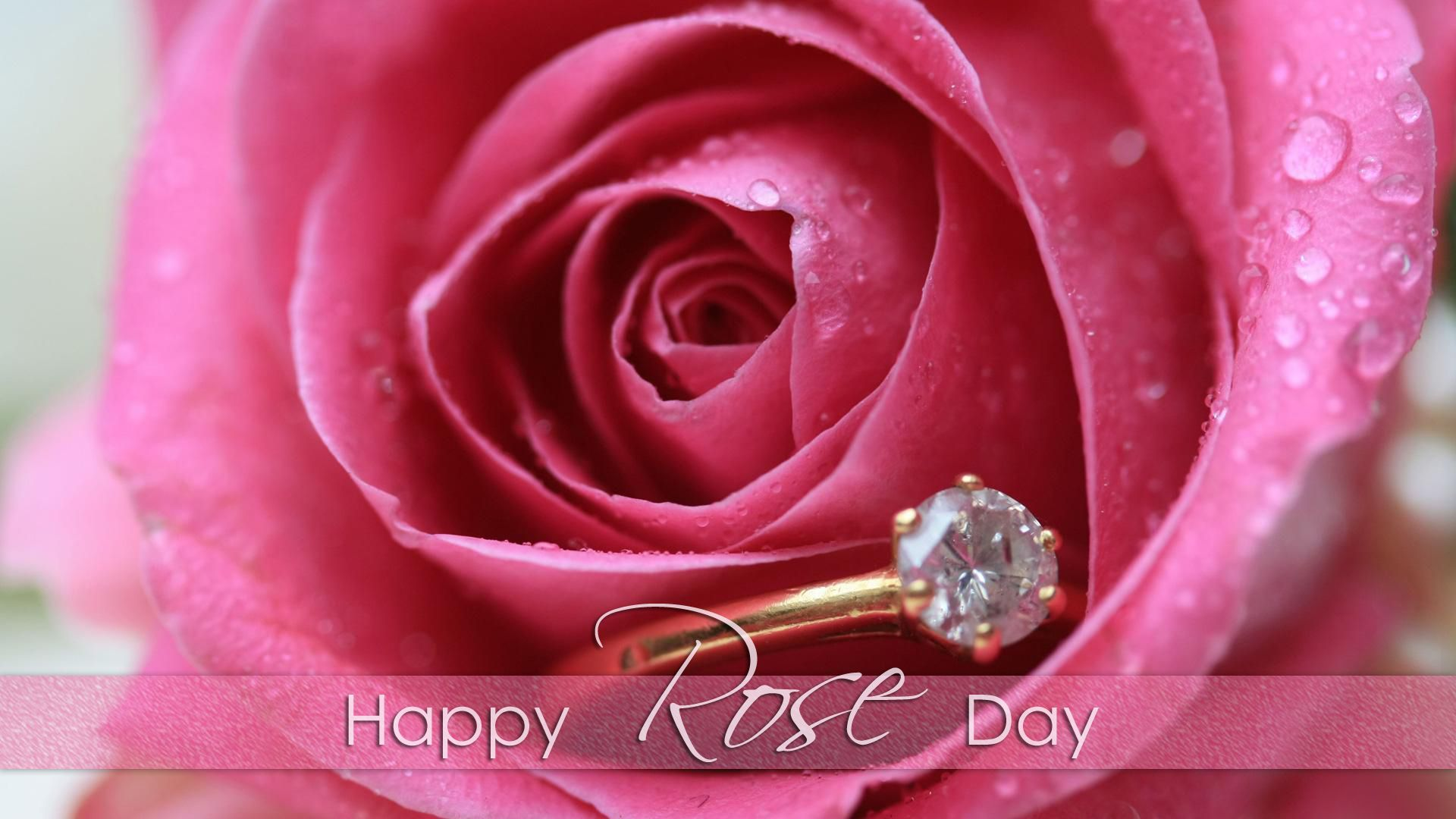 Rose Day Image for Whatsapp DP, Profile Wallpapers – Free Download