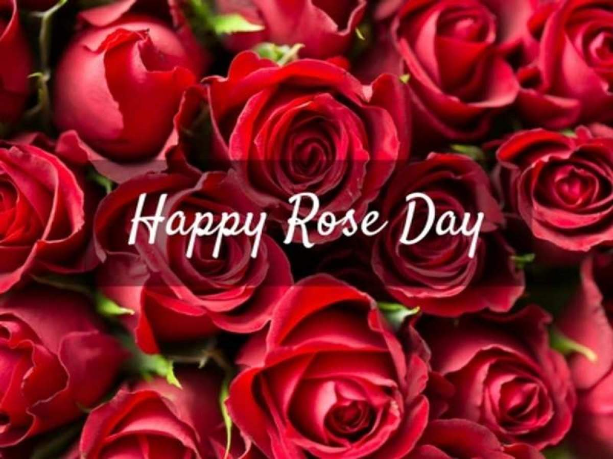 Happy Rose Day 2019: Wishes, SMS, messages, quotes, image, Facebook