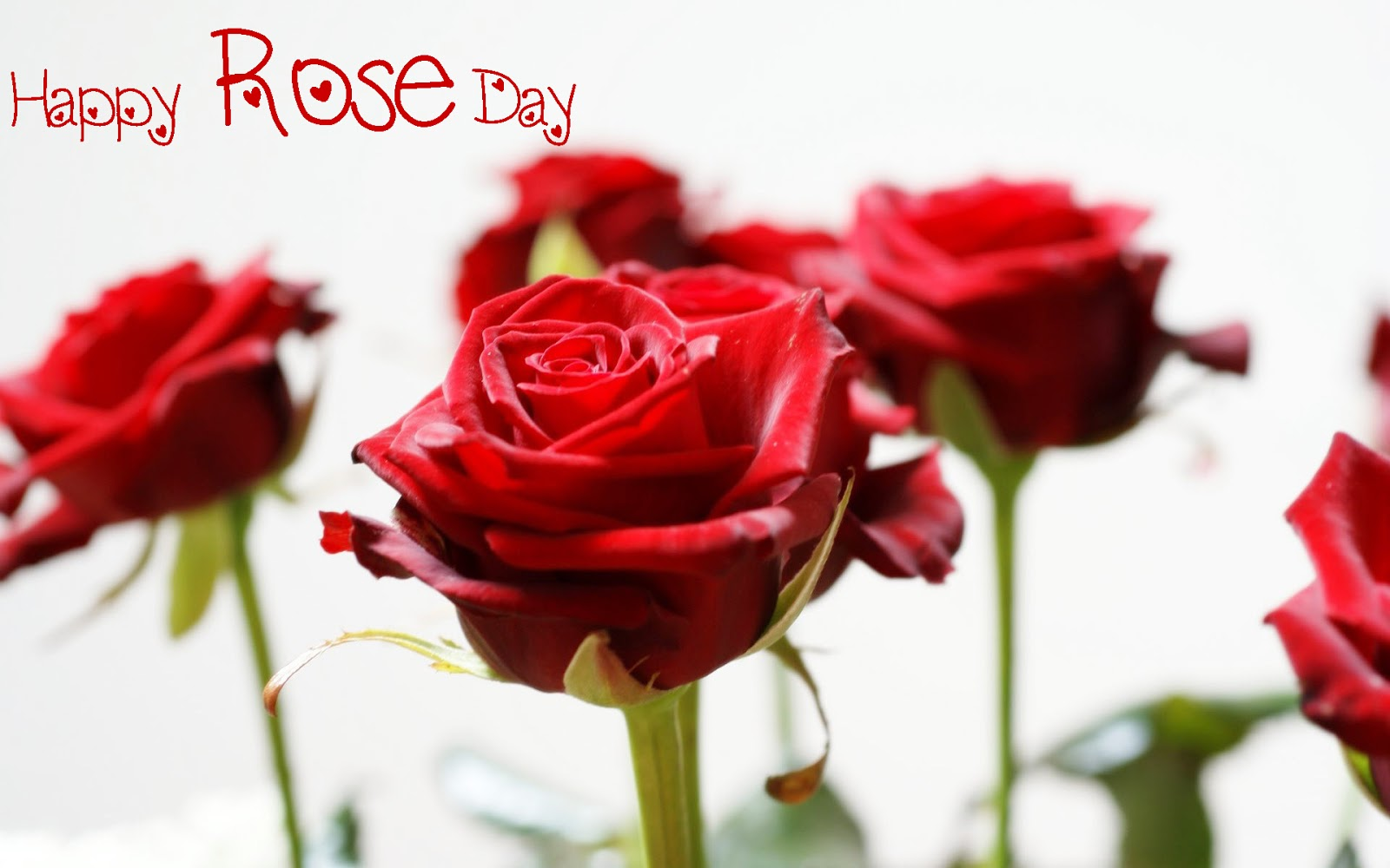 Happy Rose Day SMS In Hindi ~ Happy Valentine Day Image