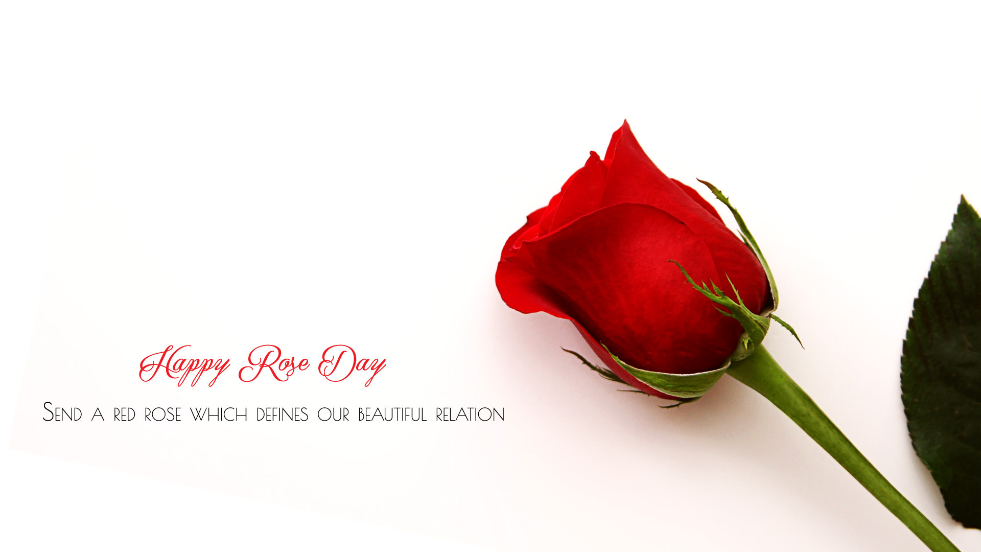 7th Feb Rose Day Wallpapers HD