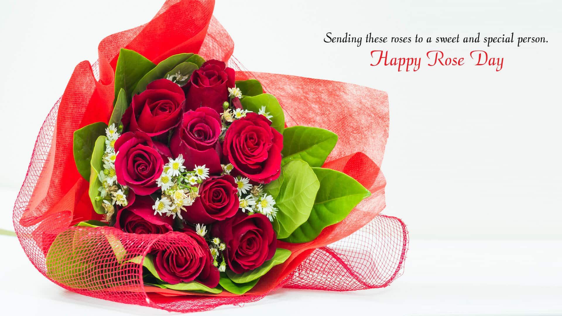 Happy Rose Day 2019 Image,Pictures,Wallpapers in HD