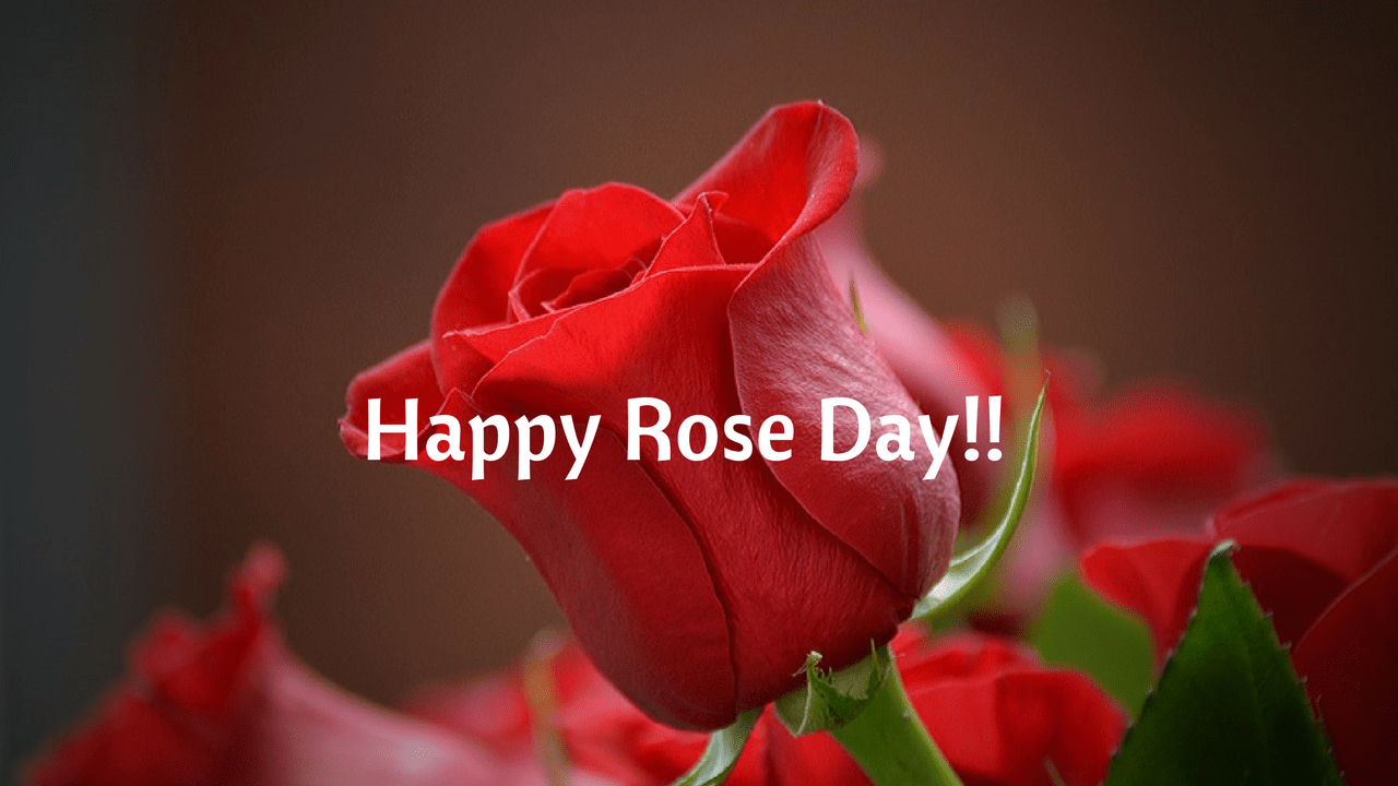 Happy Rose Day Image HD download with quotes for Boyfriend