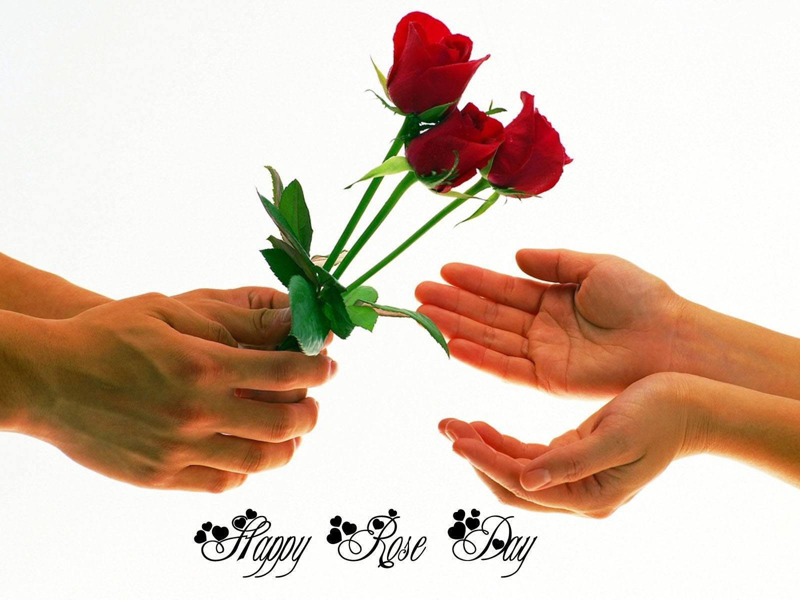 Highly Romantic Rose Day SMS, Wishes For Girlfriend/Wife With Image