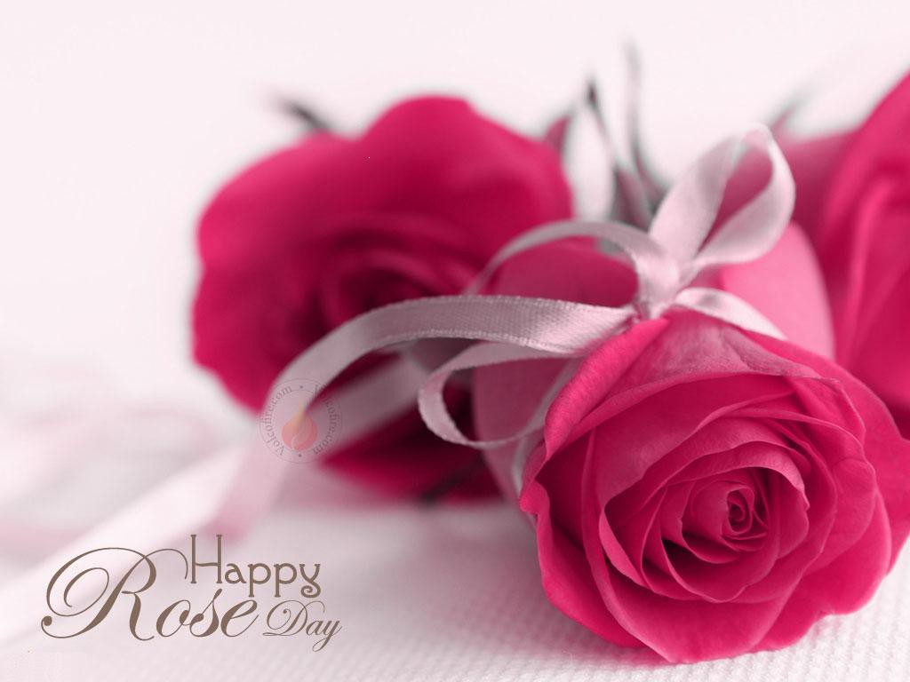 Rose Day HD Wallpapers 12735