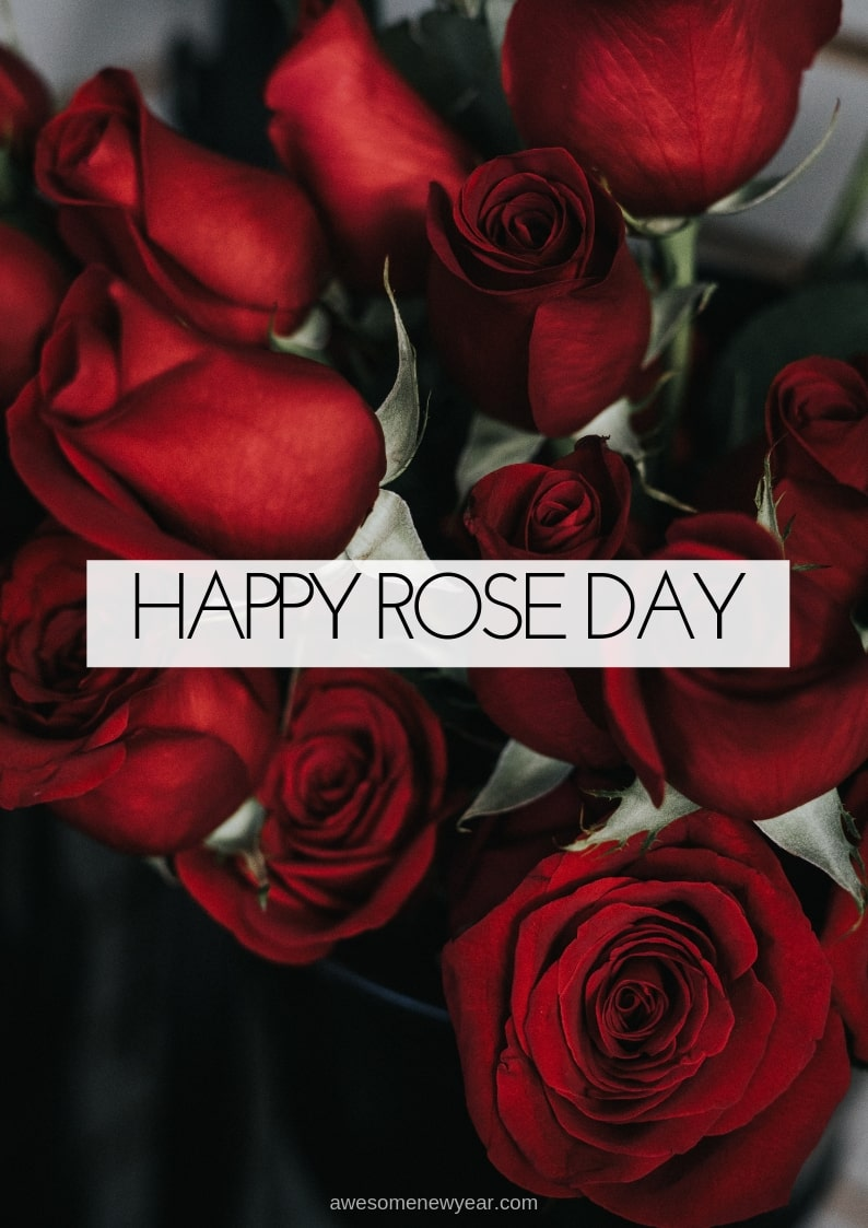 Happy Rose Day Image Photos Pictures & Wallpapers HD