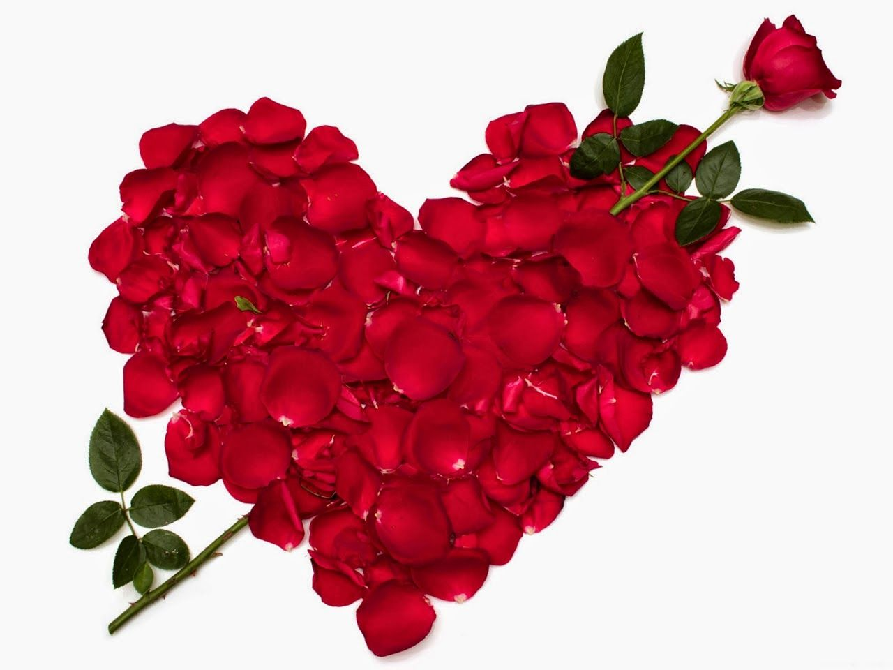 Happy Rose Day 2019 Image, Wishes, Quotes, Wallpapers, SMS and Messages