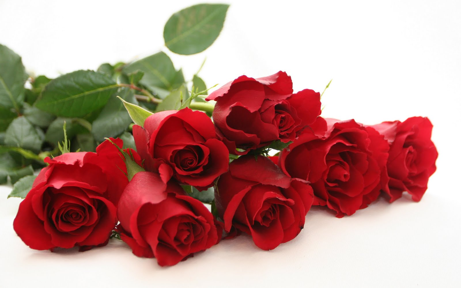 Special for Valentine's Day : Top 100+ Awesome Rose Day Love