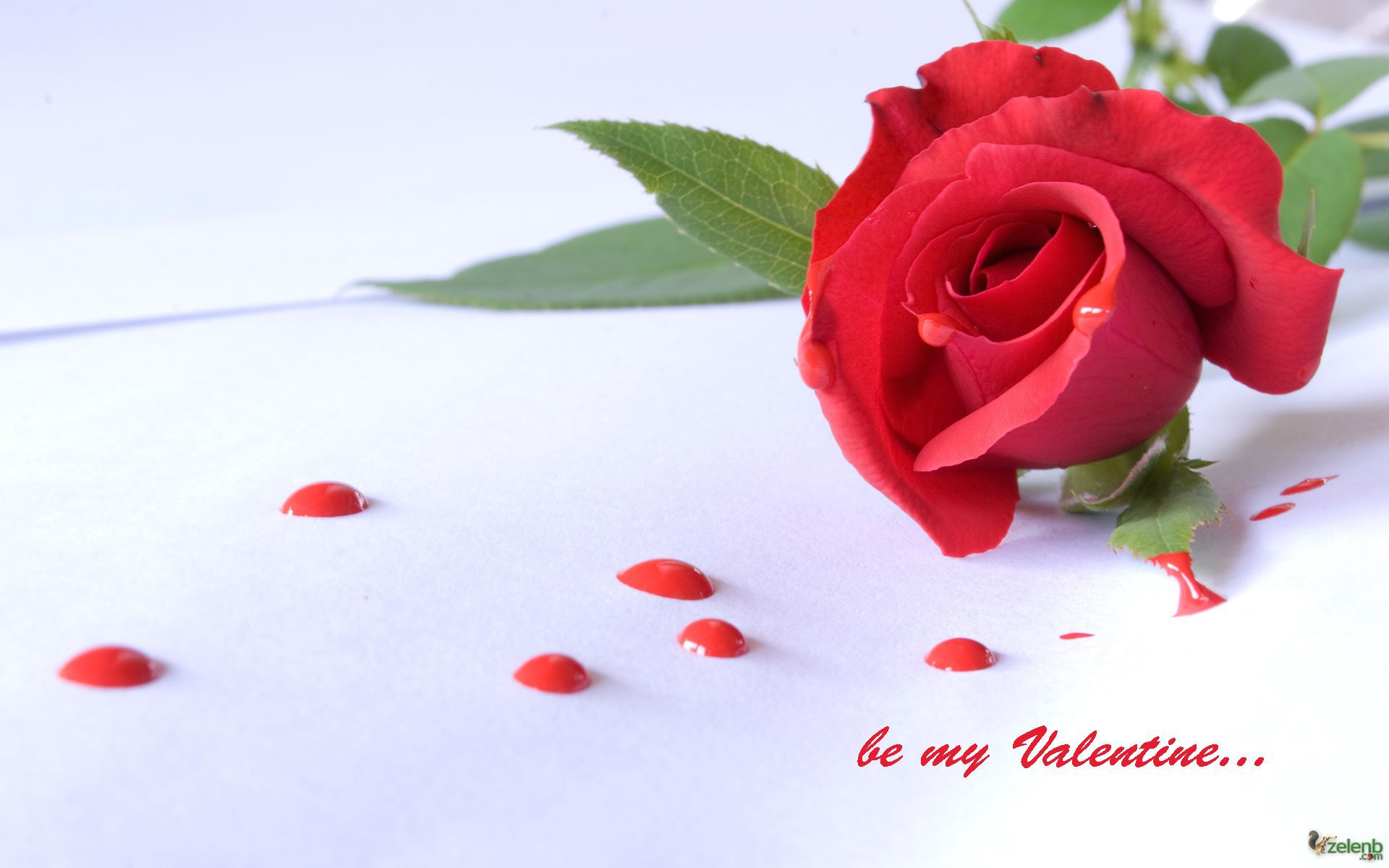 Happy Rose Day Hd Wallpapers ,free download,