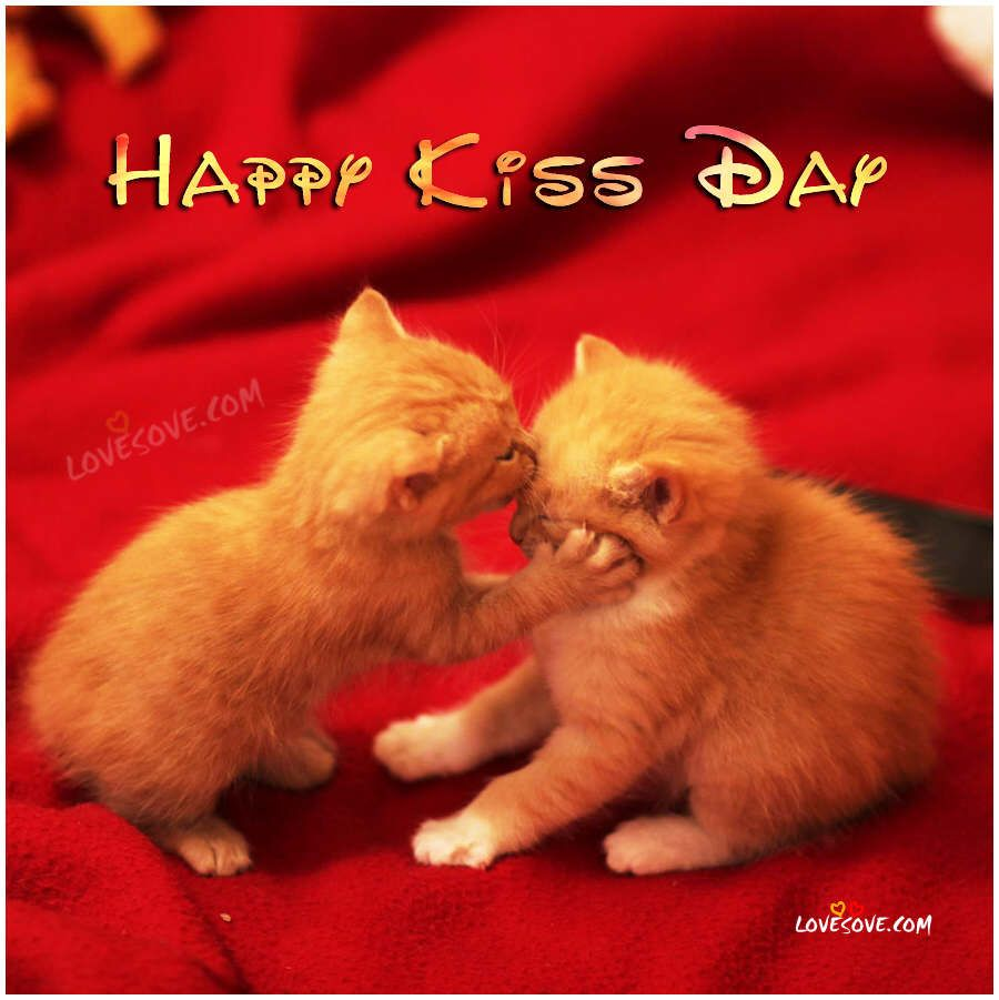 happy kiss day wallpapers happy kiss day kittens kissing