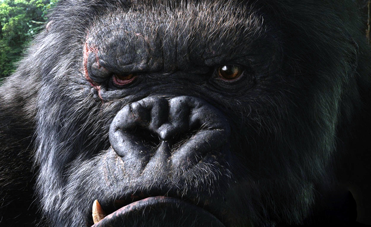 106 Gorilla HD Wallpapers