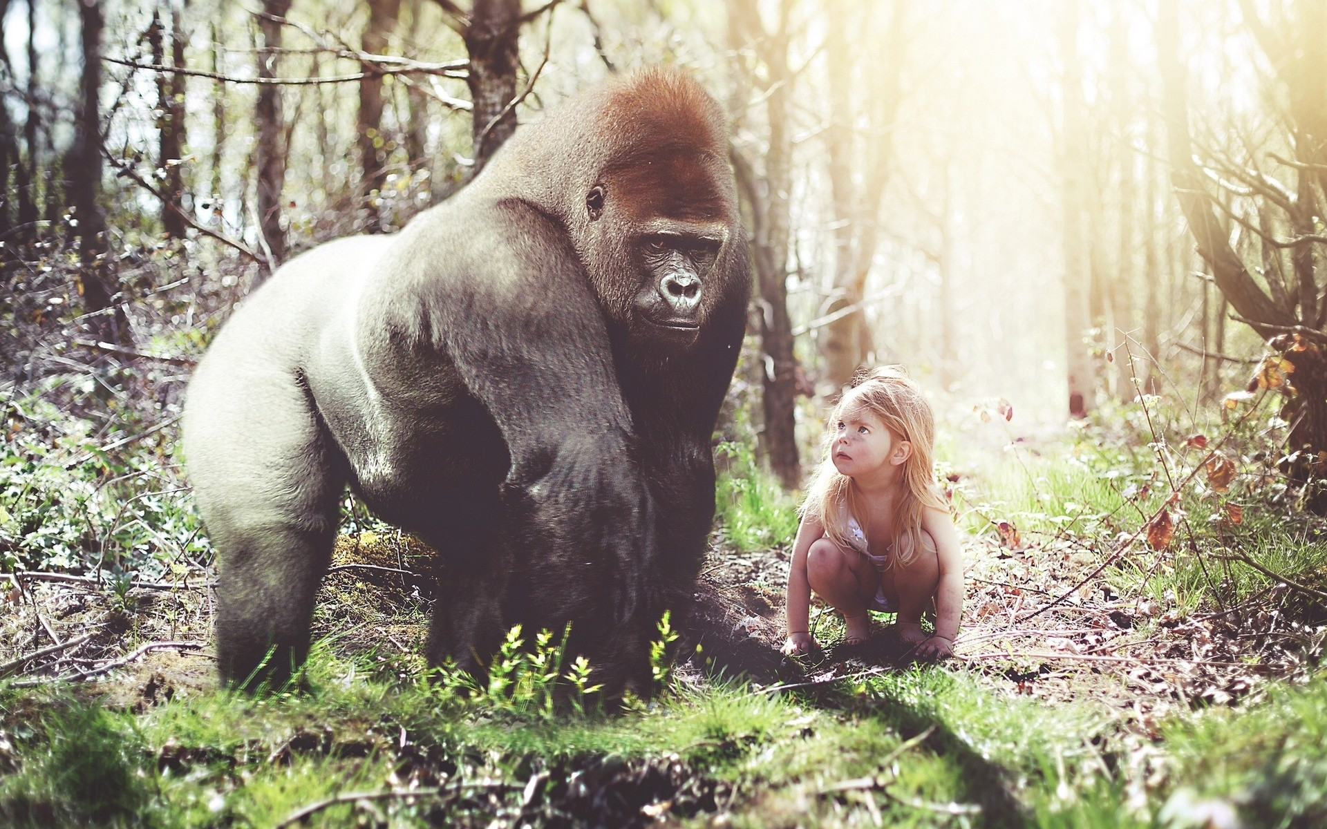Gorilla Wallpapers ·①