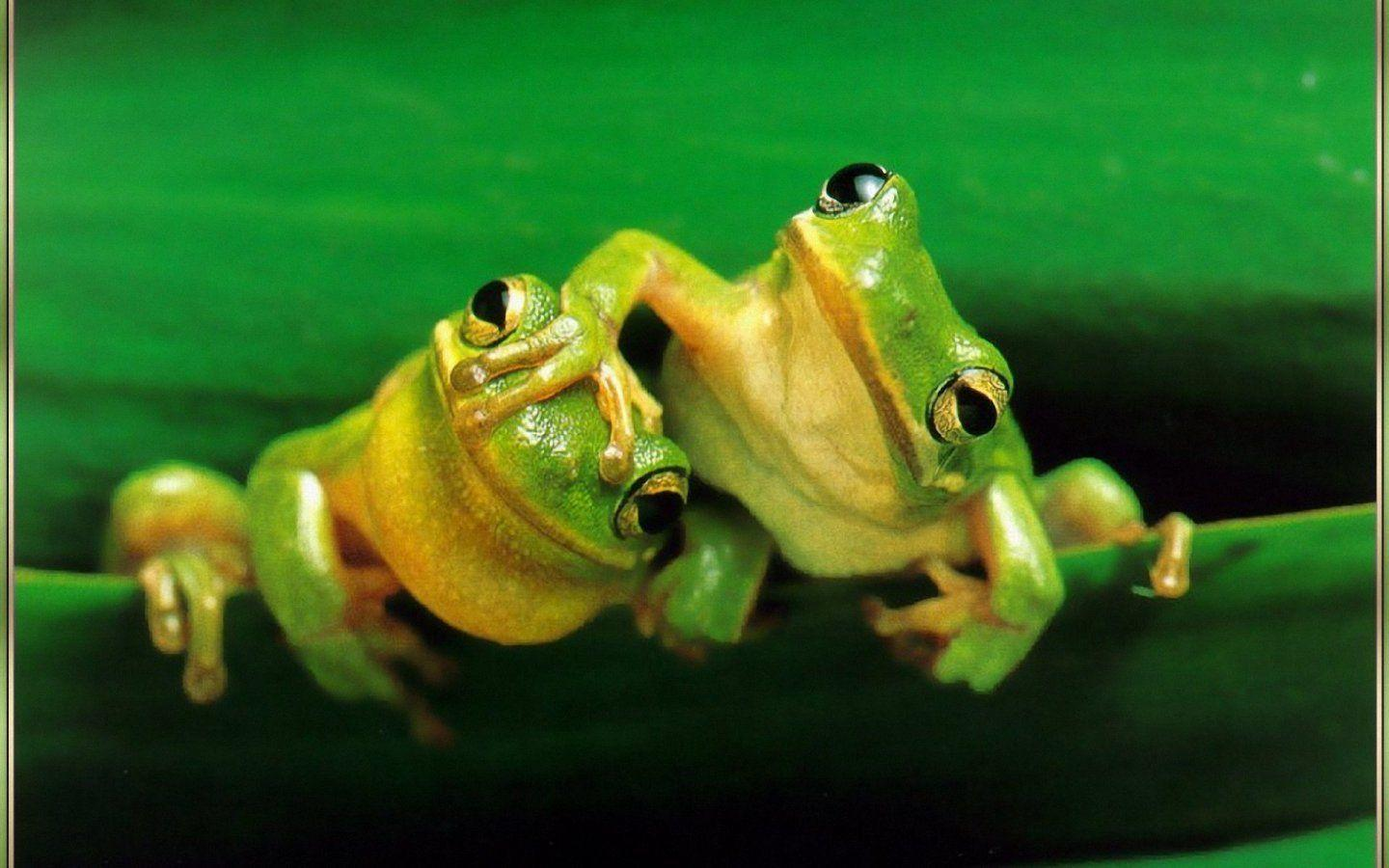 Frog In Water Wallpapers Image 129 Wallpapers