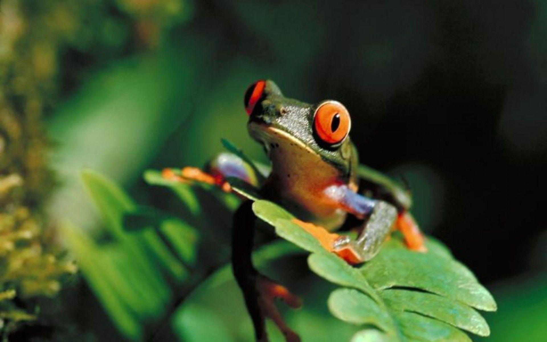 Wonderful Tree Frog Wallpapers 1920x1200PX ~ Frog Wallpapers