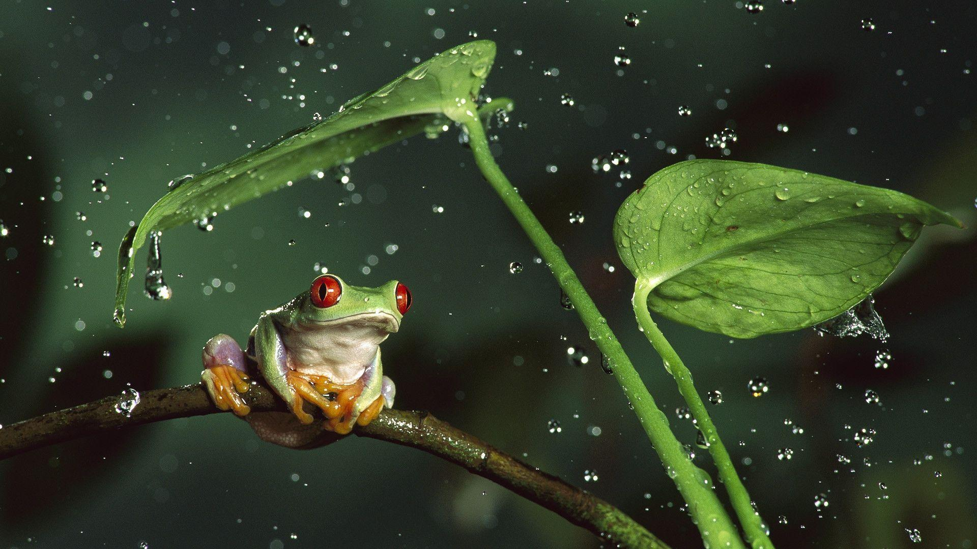 Frog and leaves desktop wallpapers 800x600, Frog and leaves