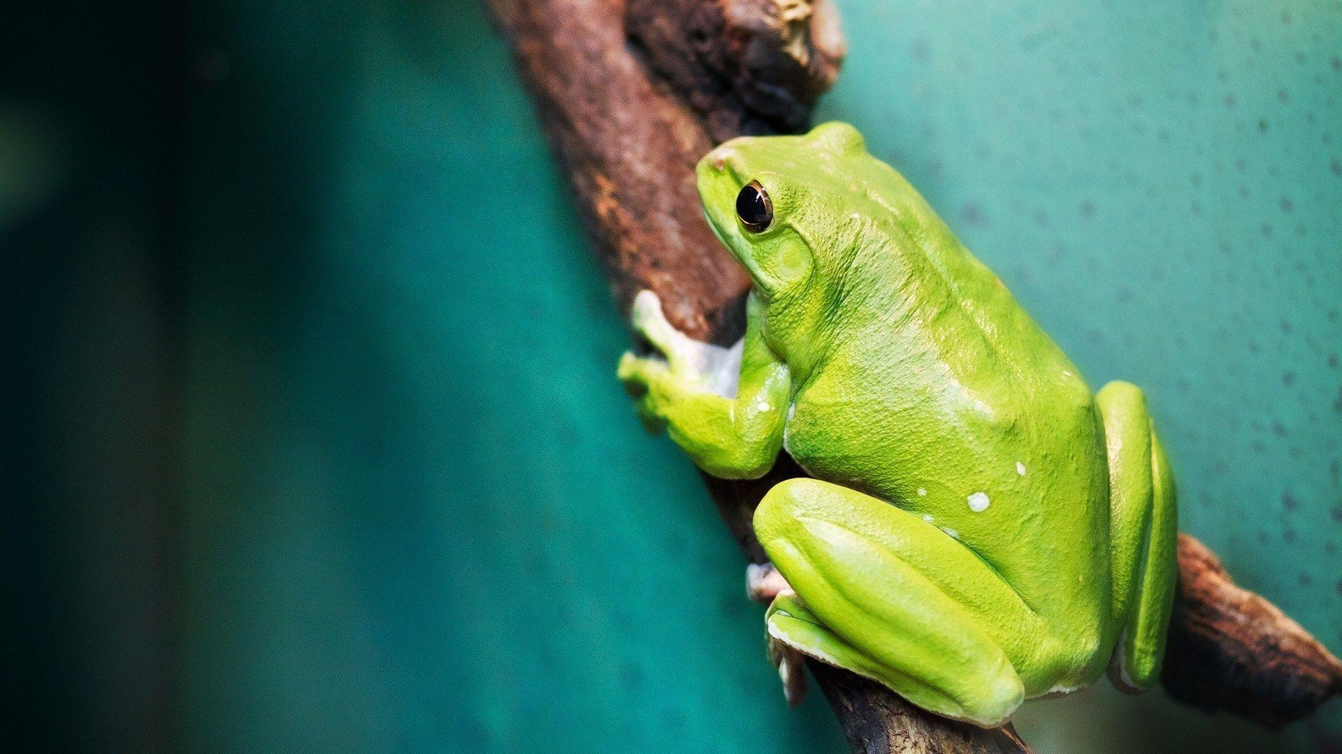 Frog Wallpapers 11924 1920x1080 px