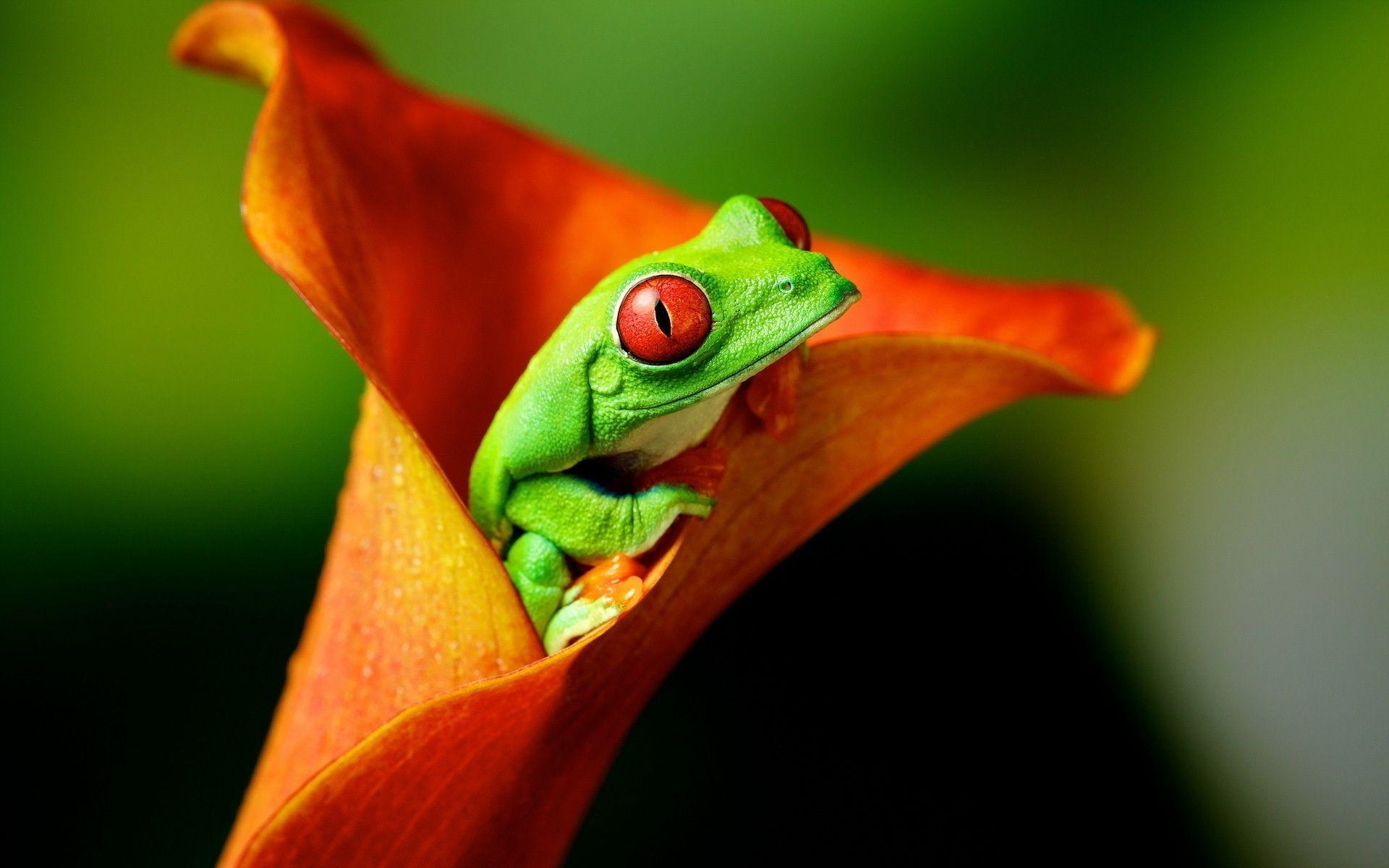 Frog Wallpapers 44314 1920x1200 px ~ HDWallSource