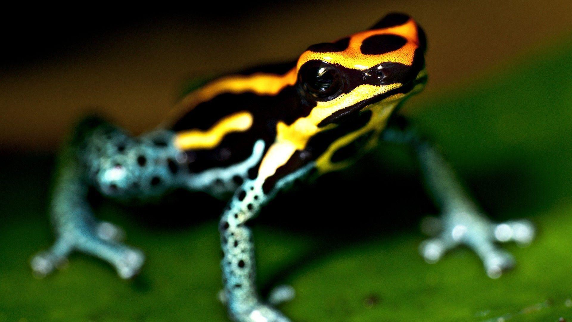 Colorful Frog HD Wallpapers 1920x1080