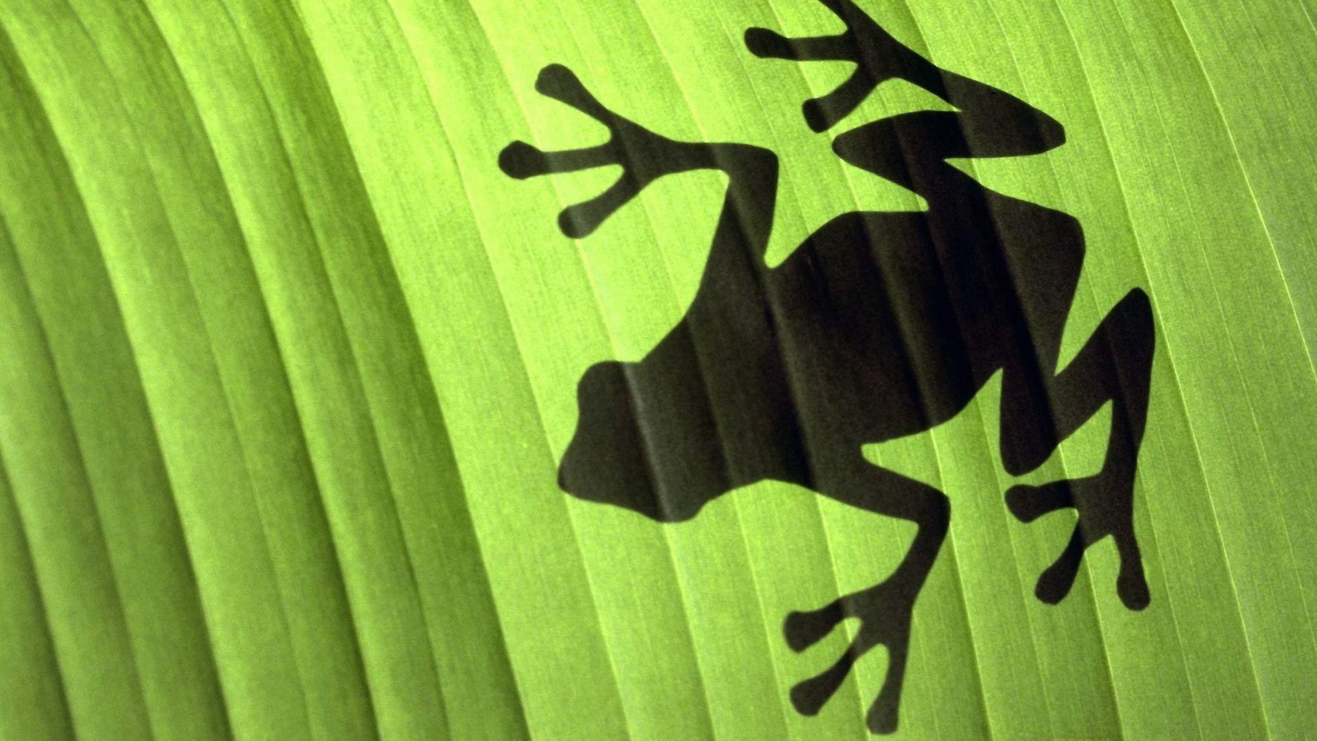 Frog Wallpapers Download Design Ideas ~ Free Frog Wallpapers For