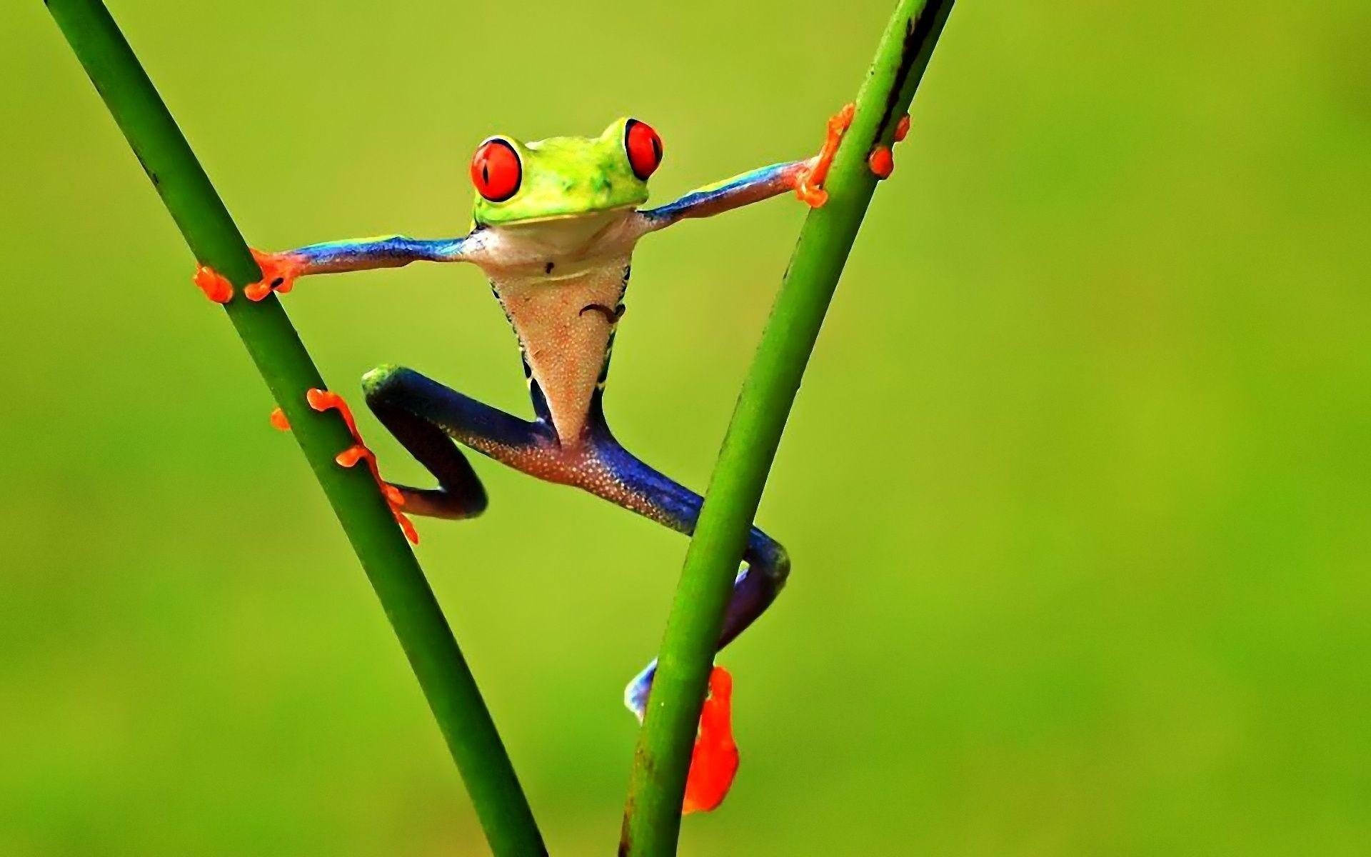 Frog Wallpapers 11918 1920x1200 px