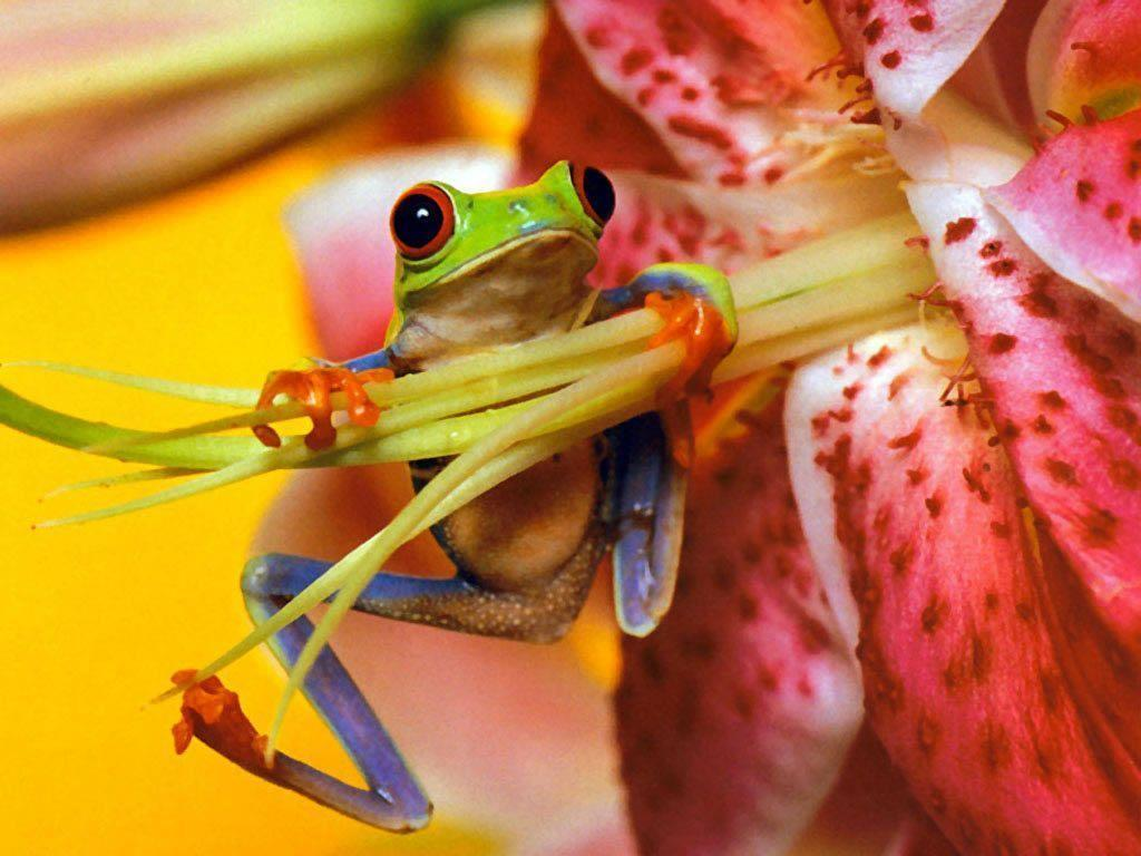 Download Frogs Back Frog Full HD Wallpapers Wallpapers HD