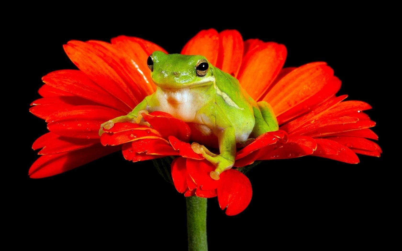 268 Frogs Wallpapers