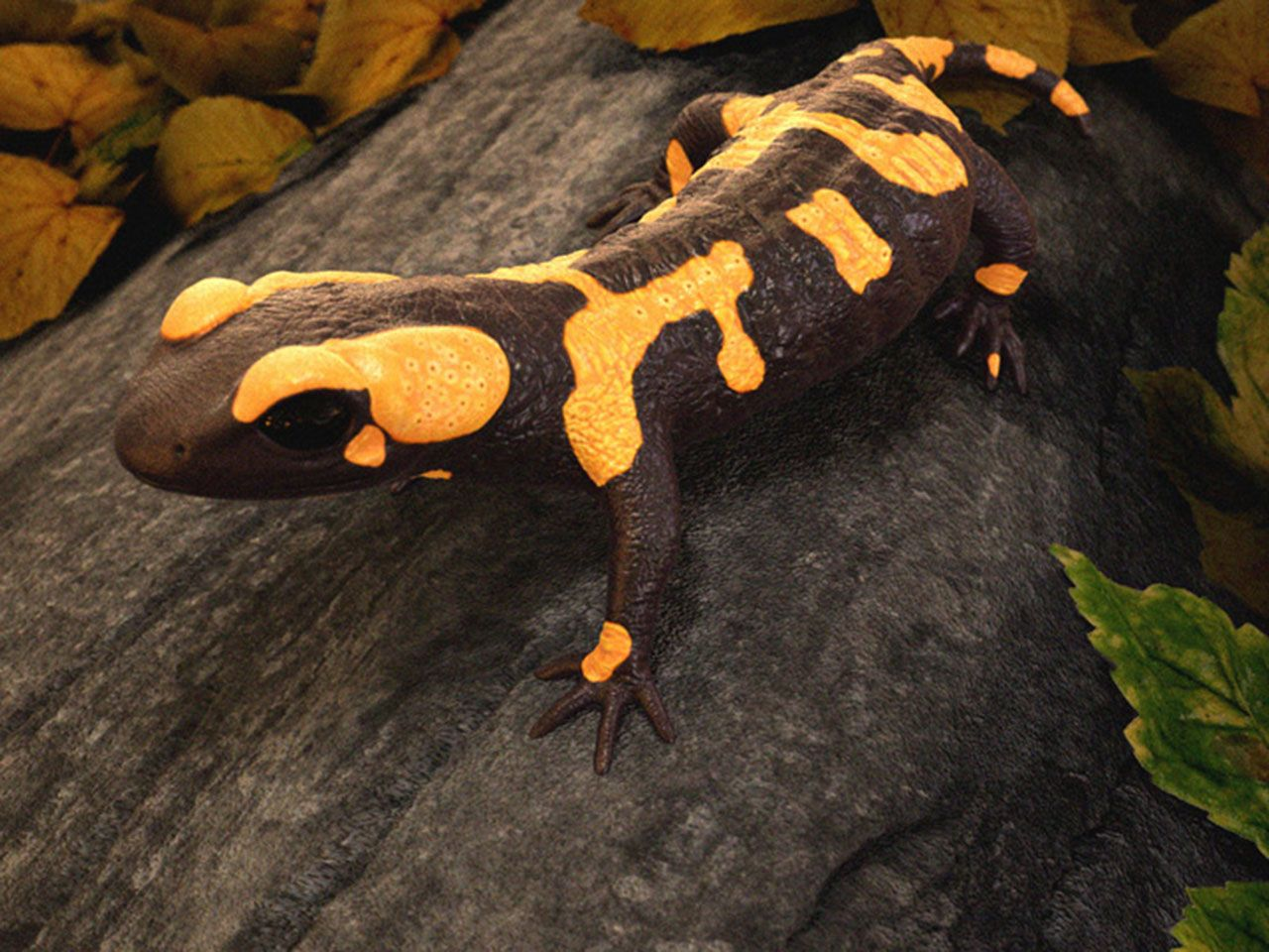 1280x960 salamander wallpapers for computer