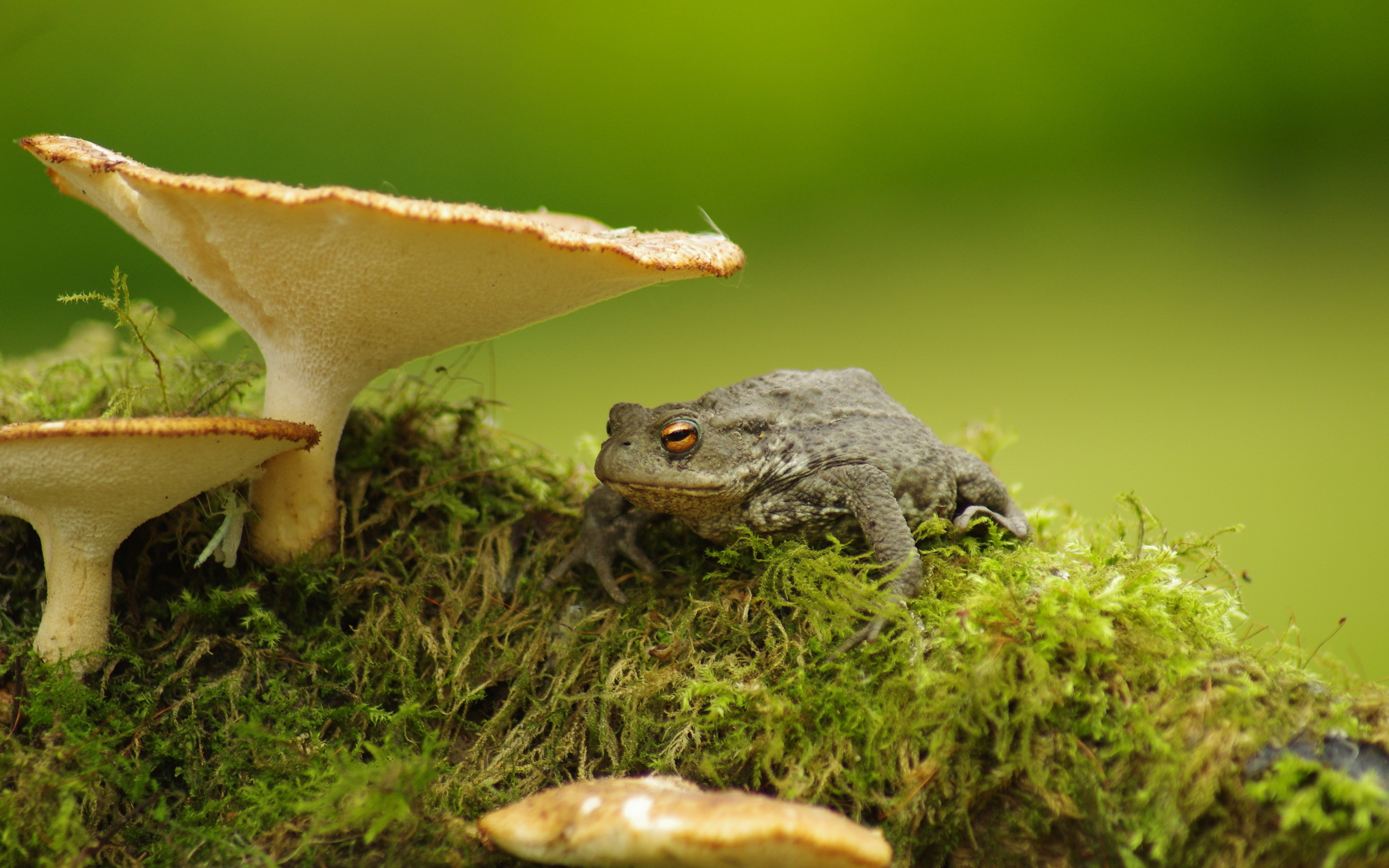 54 Toad HD Wallpapers