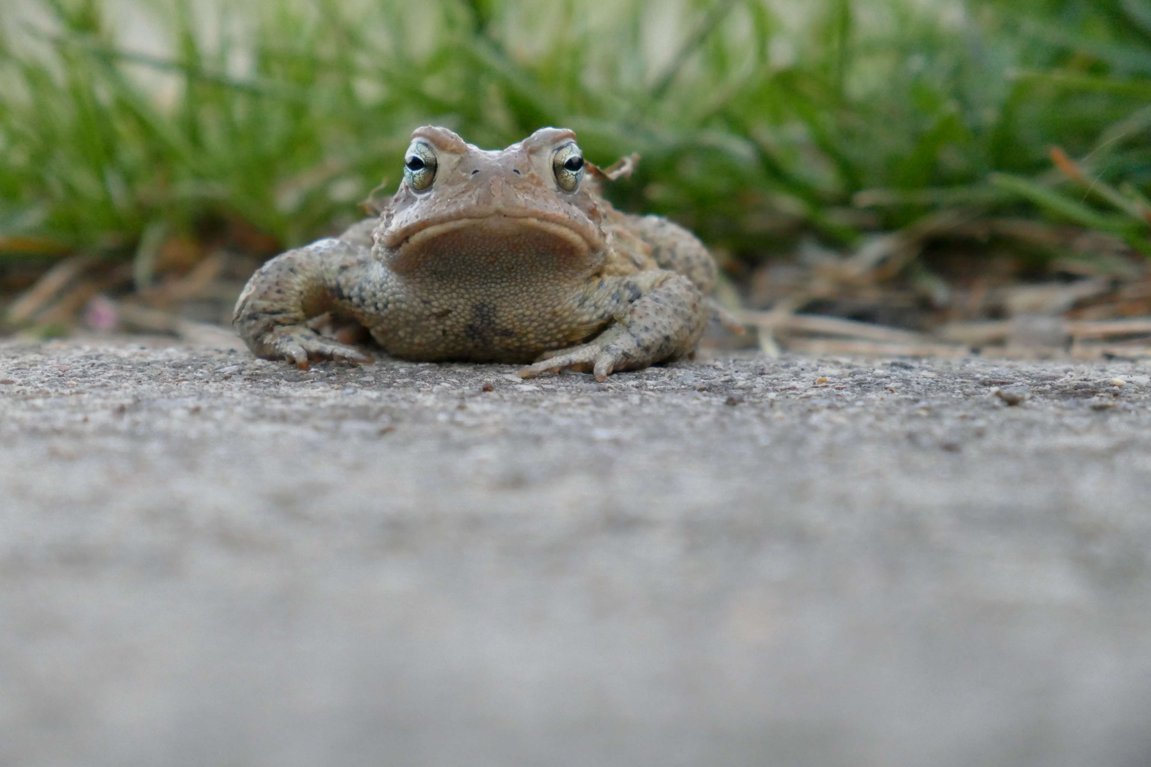 frog, toad 4k wallpapers and backgrounds