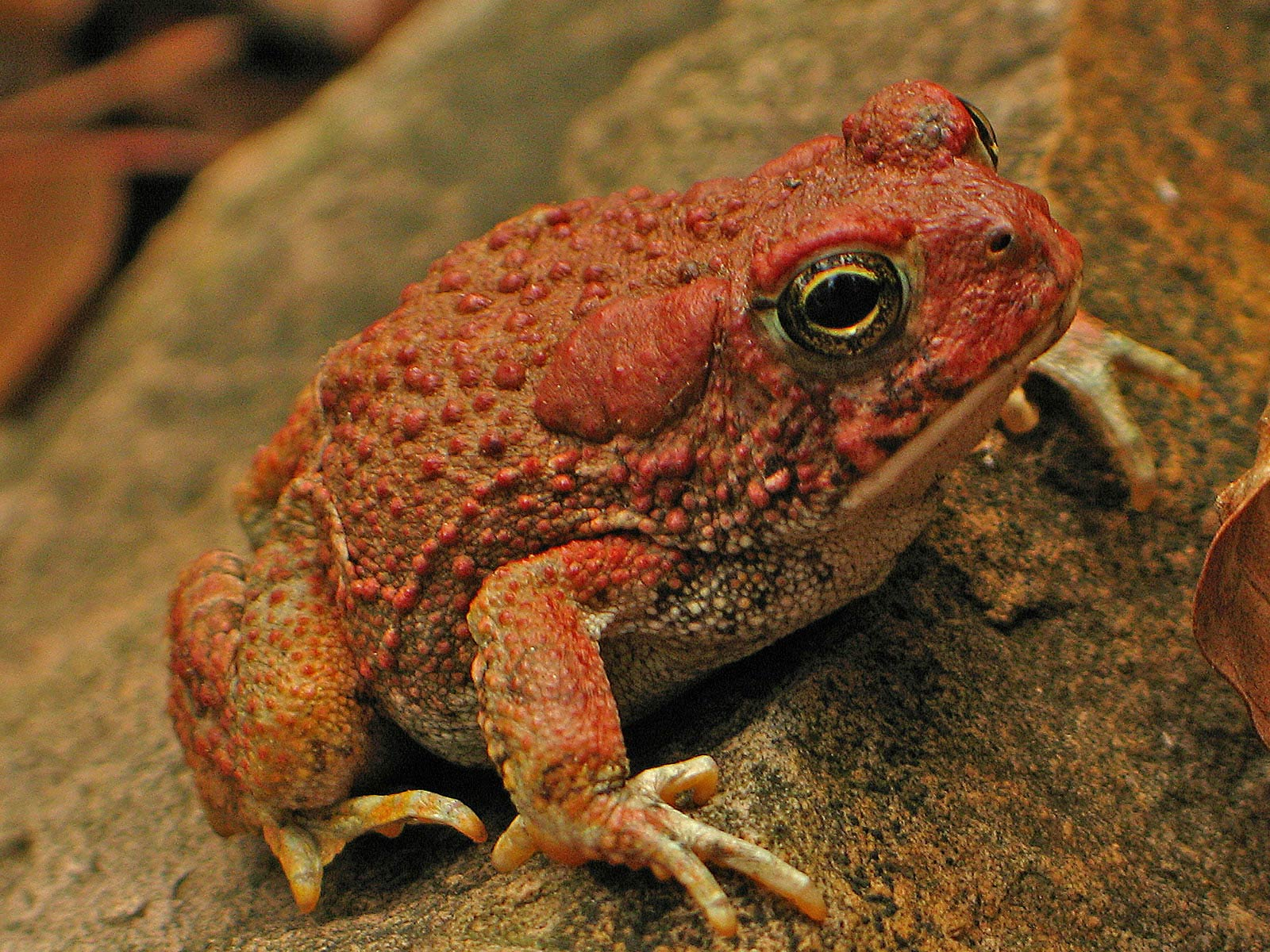 Best 67+ Toad Wallpapers on HipWallpapers