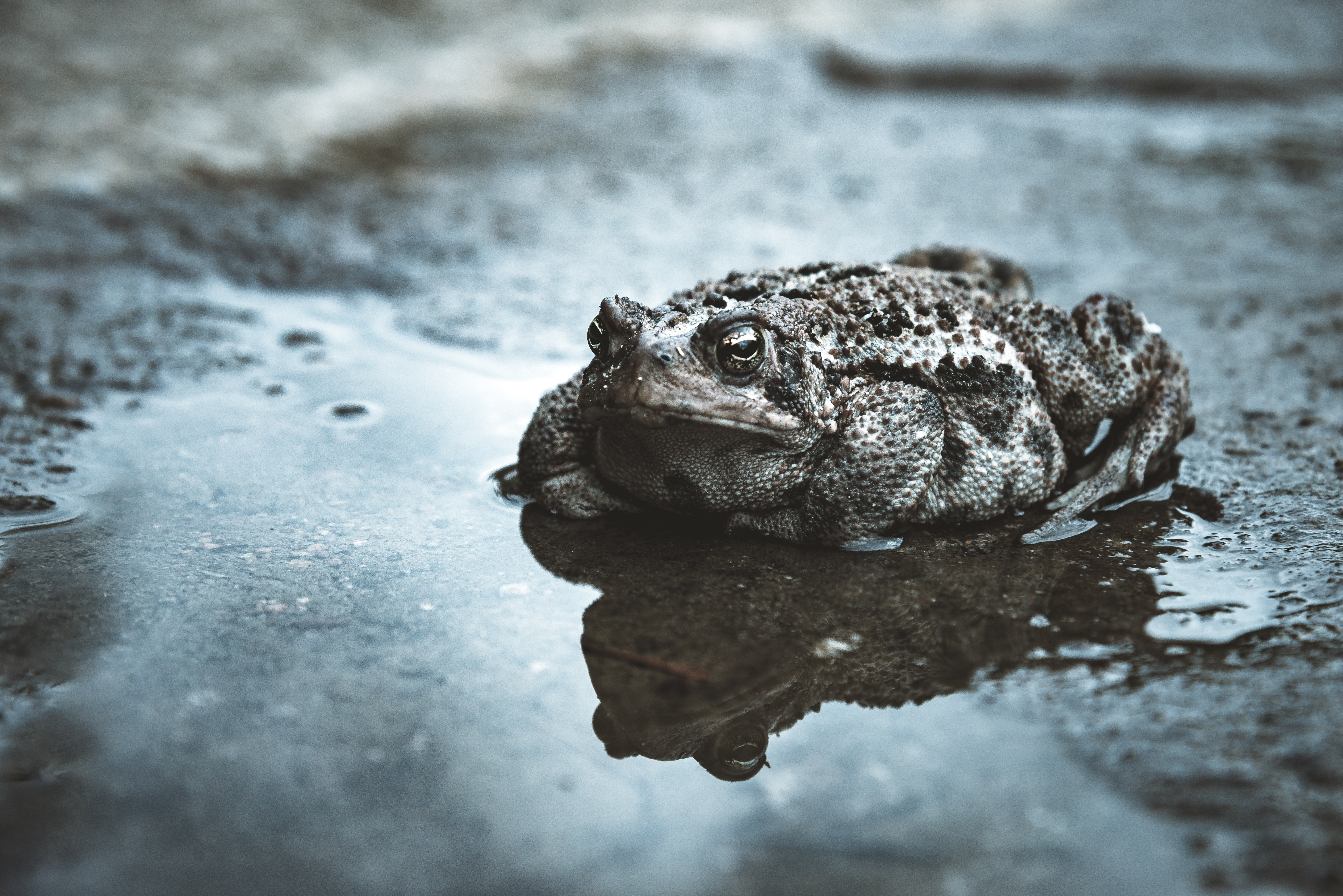 Toads Pictures