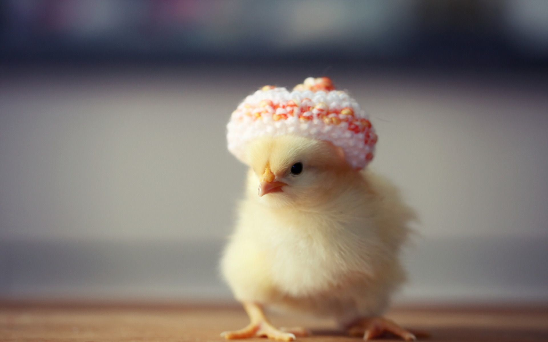 47+ Baby Chicks Wallpapers