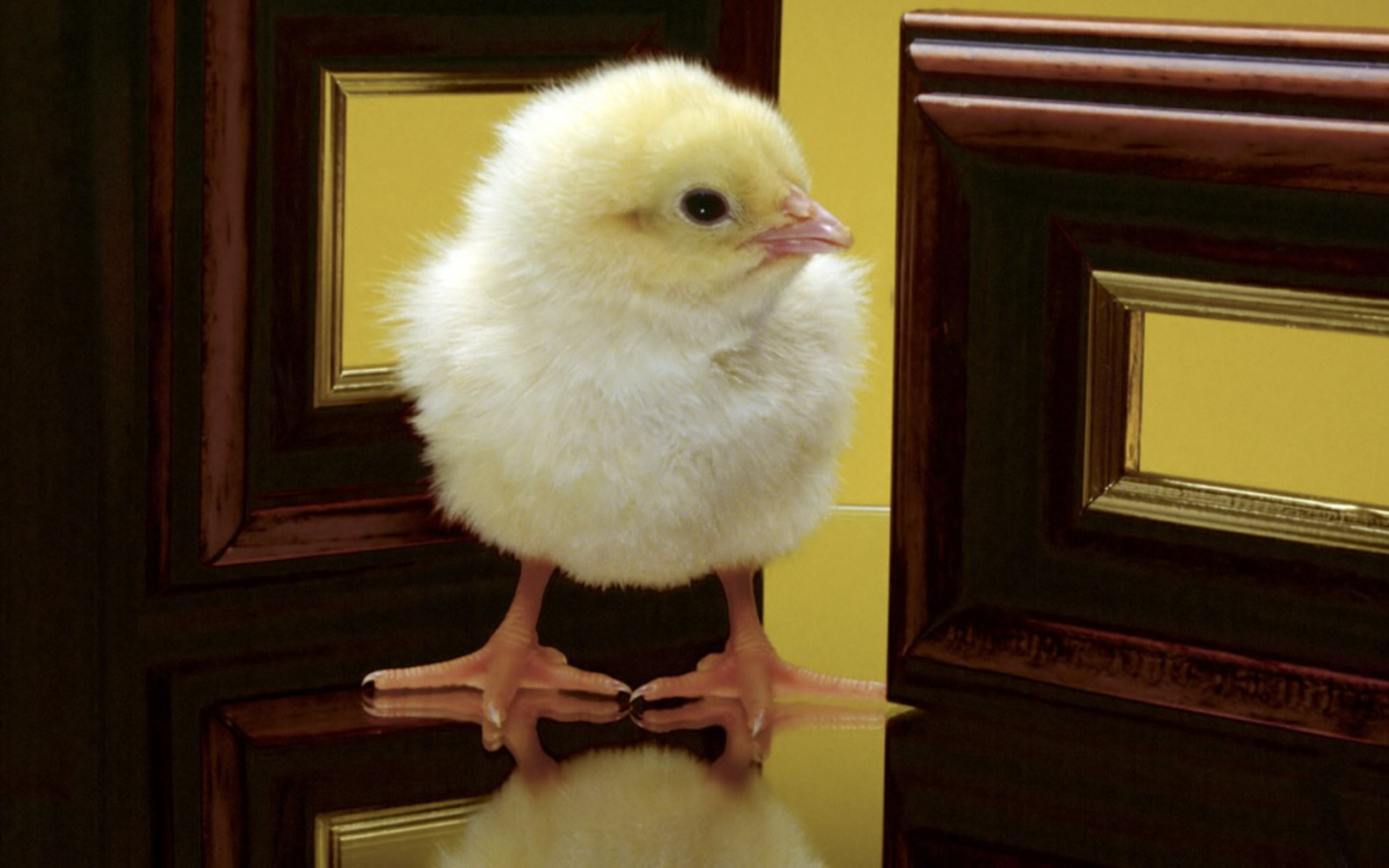 Free Cute Easter Day Chick Wallpapers wallpapers Wallpapers