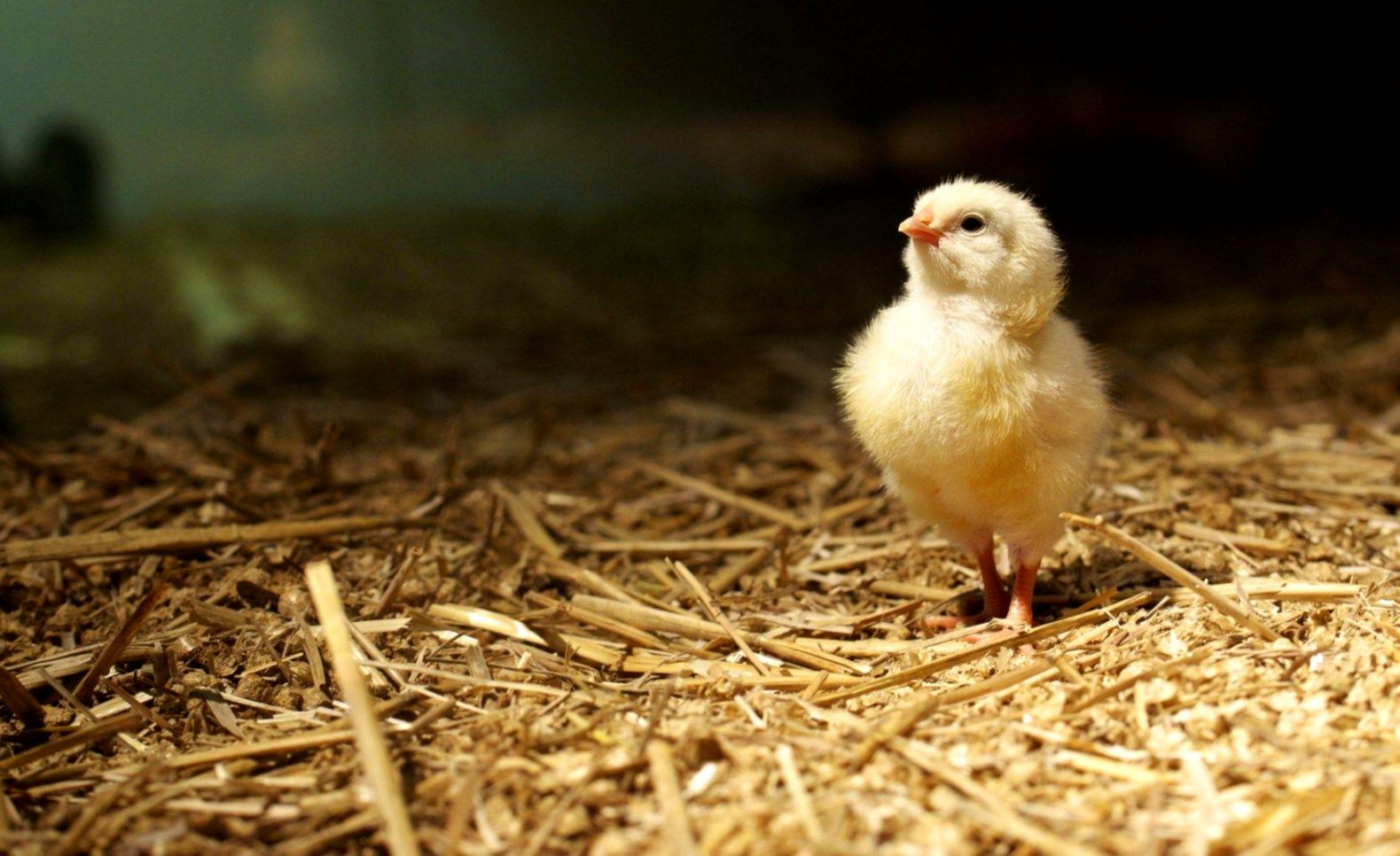 Chick Look Hd Wallpapers