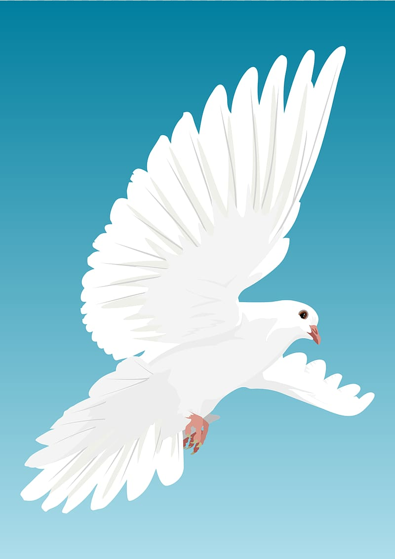 36+] Dove Backgrounds