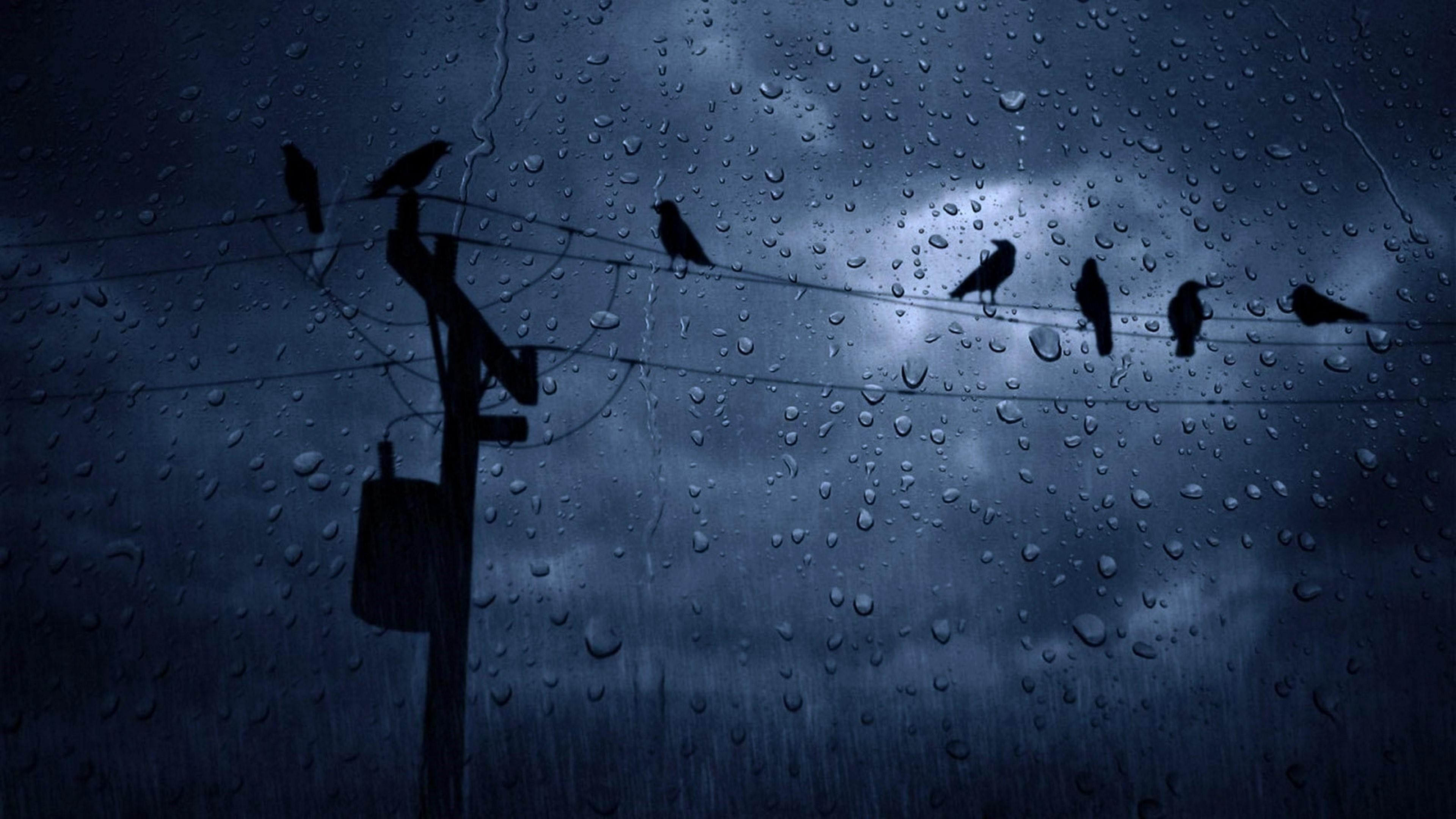 Crows In The Rain Wallpapers