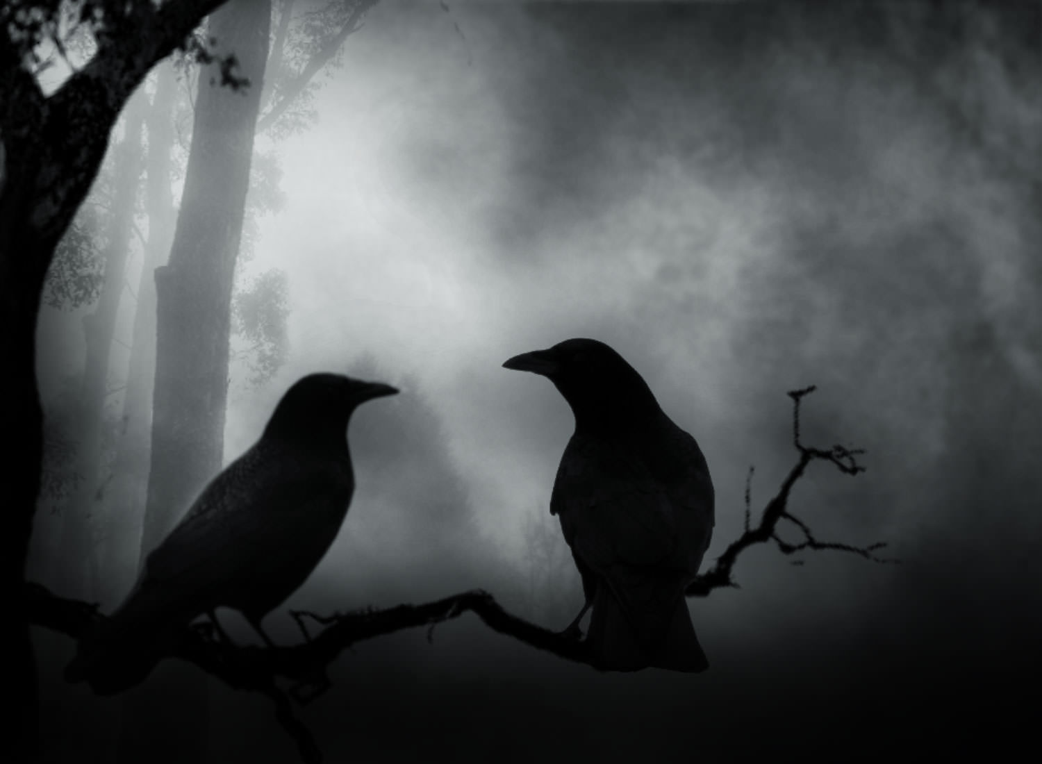 Dark Crows Couple wallpapers from Dark wallpapers