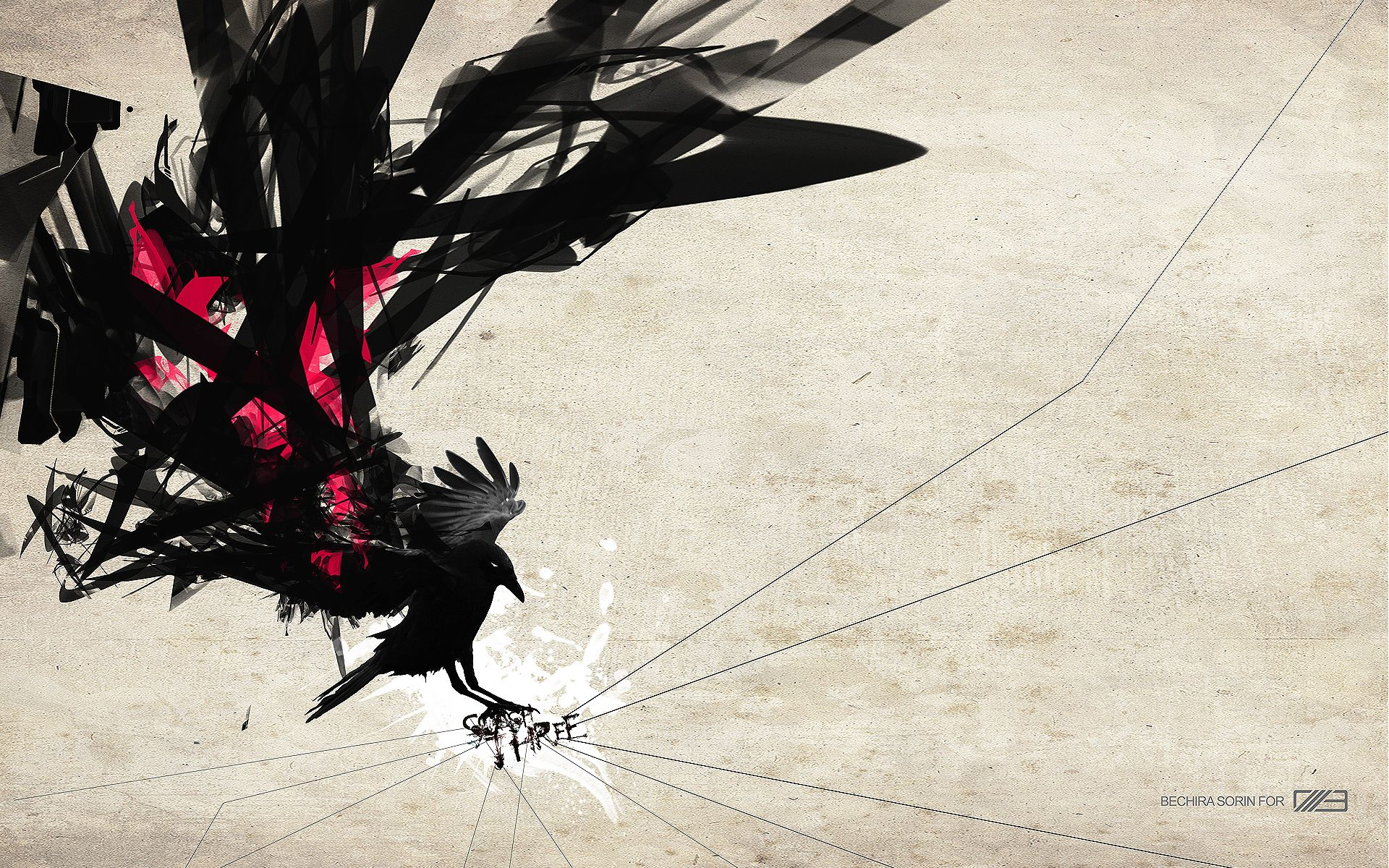 crows :: Wallpapers